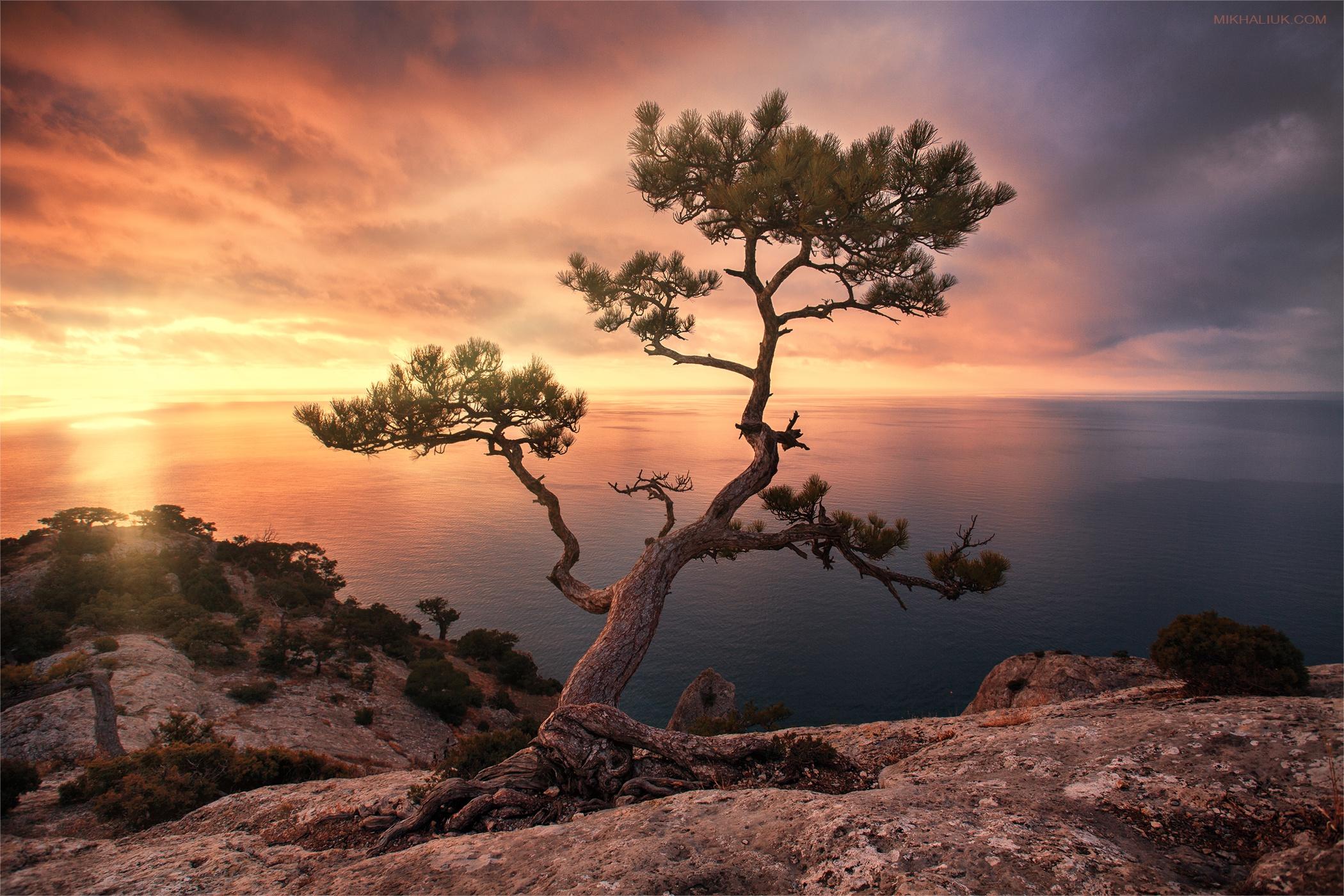 картинка дерево на скале был клуб