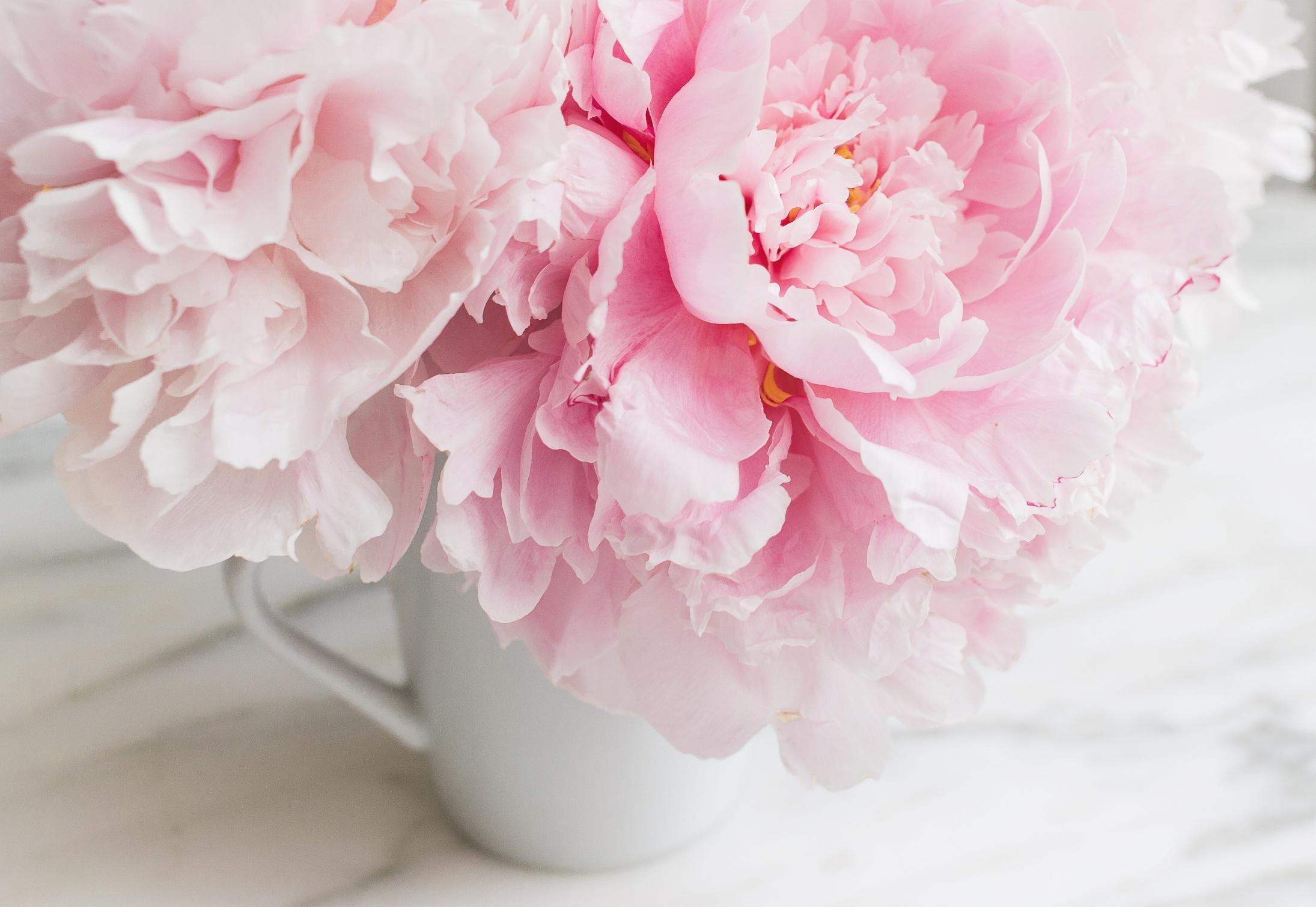 Картинка цветы пионы нежные, приколы