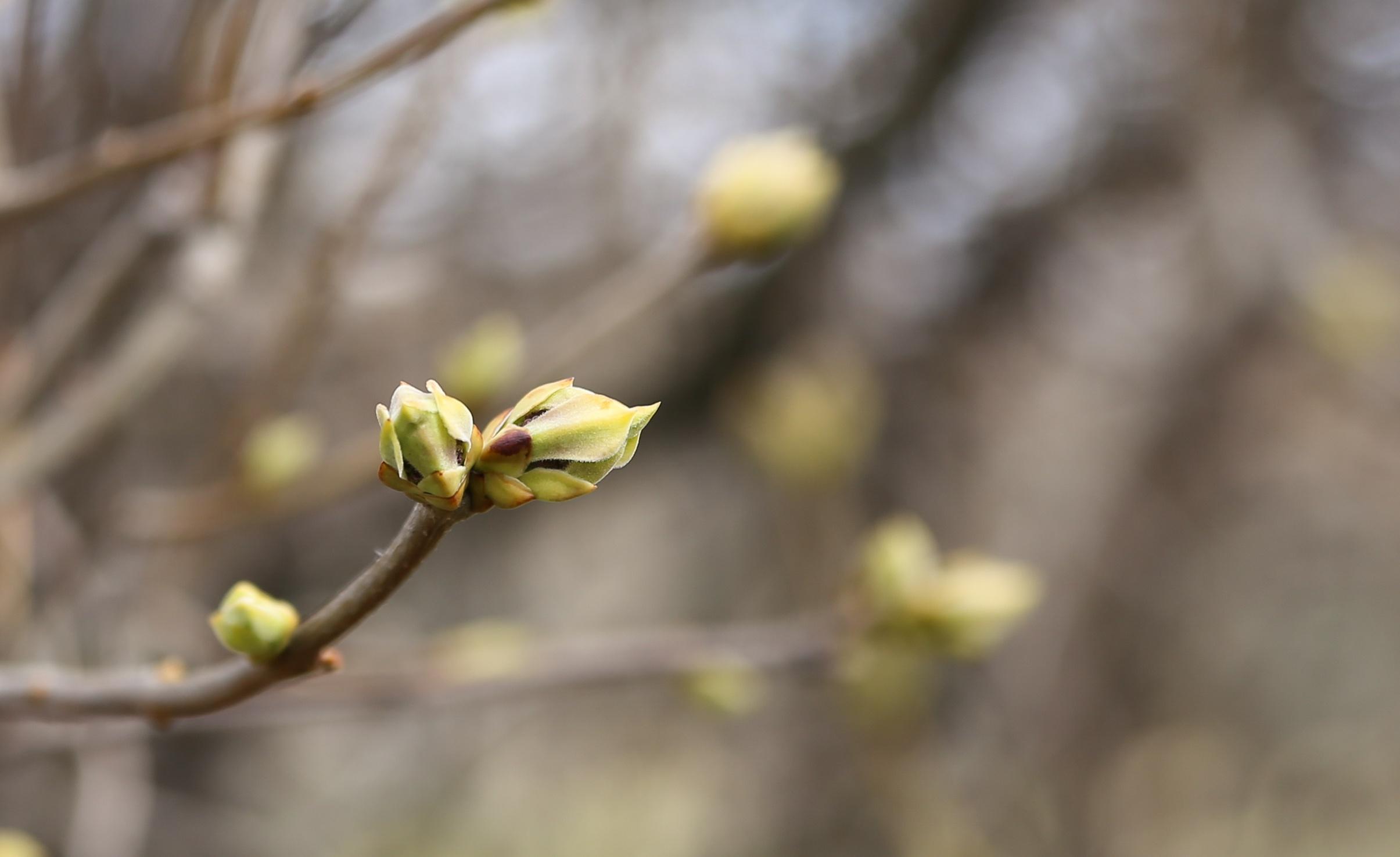 Фотографии ранней весны на рабочий стол было