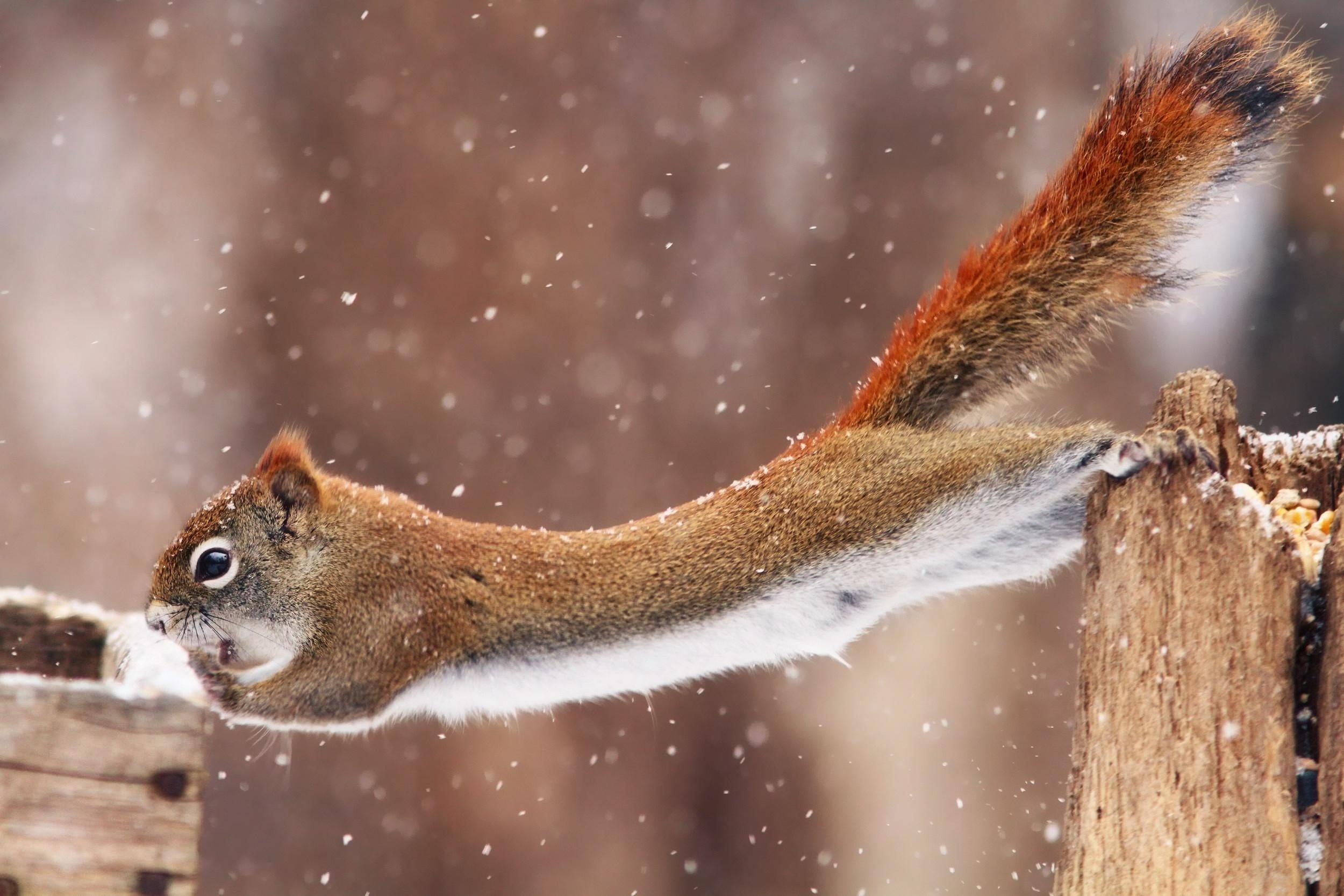 Открытки поздравления, животные зима приколы картинки