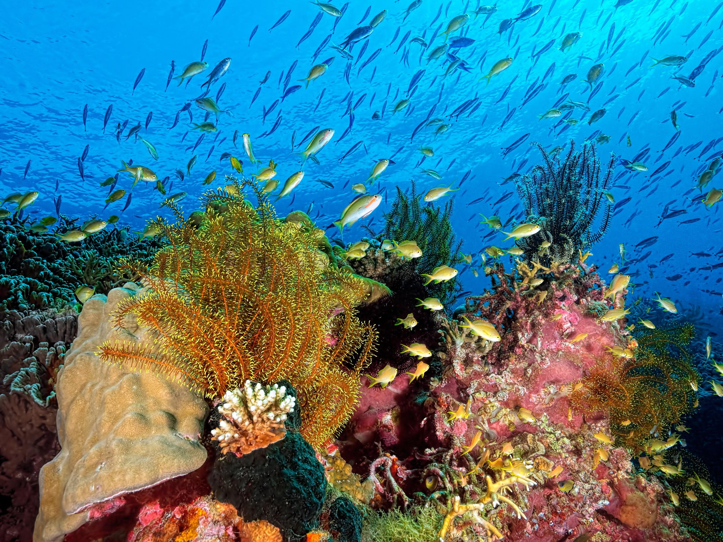 Картинка море с рыбками и водорослями