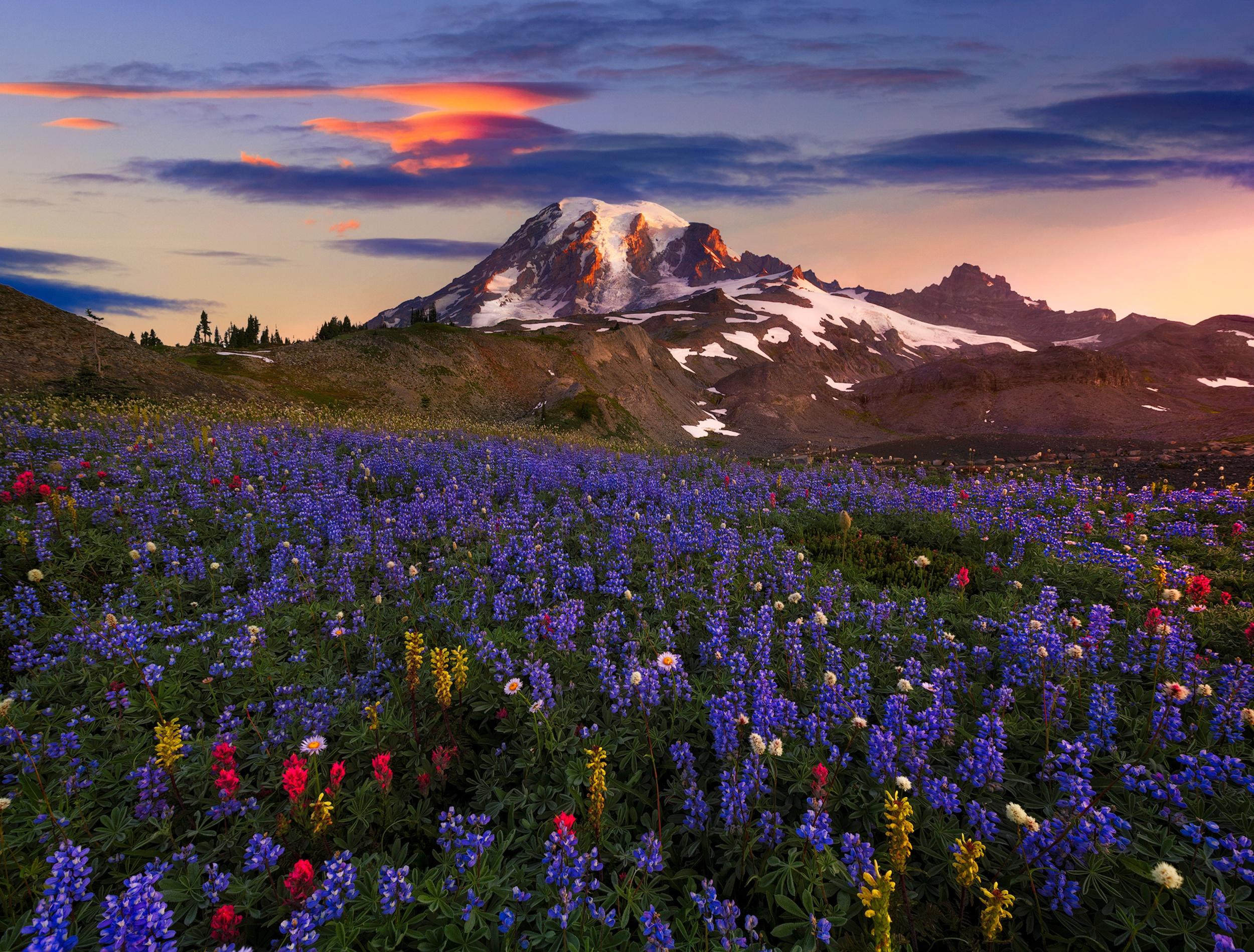задача, цветущие горы картинка тюнинг-ателье анонсировало для