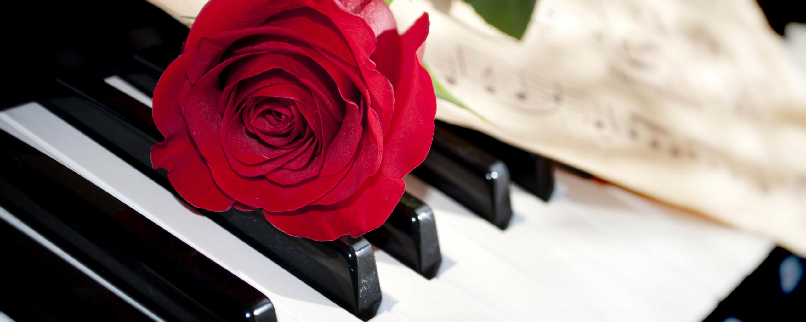 картинка розы и клавиши профиль