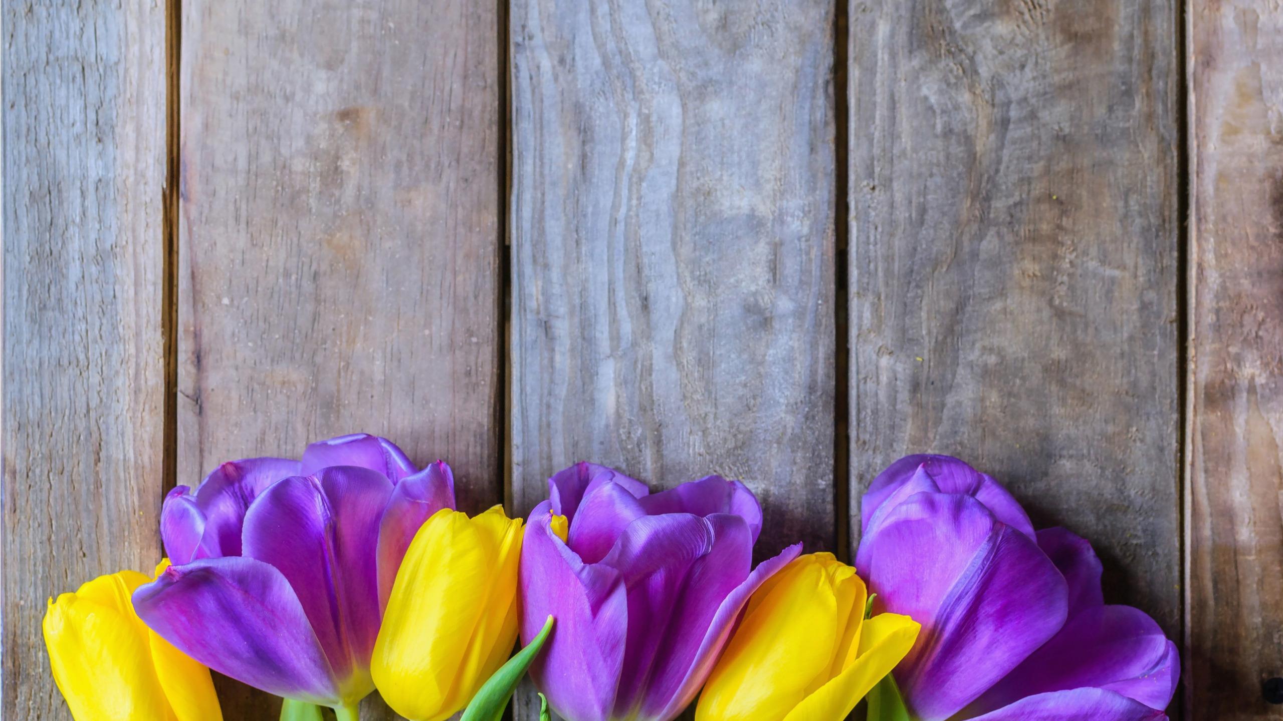которой тюльпаны в коробке картинки на фоне полосатых обоев сиреневых калькулятор для точного