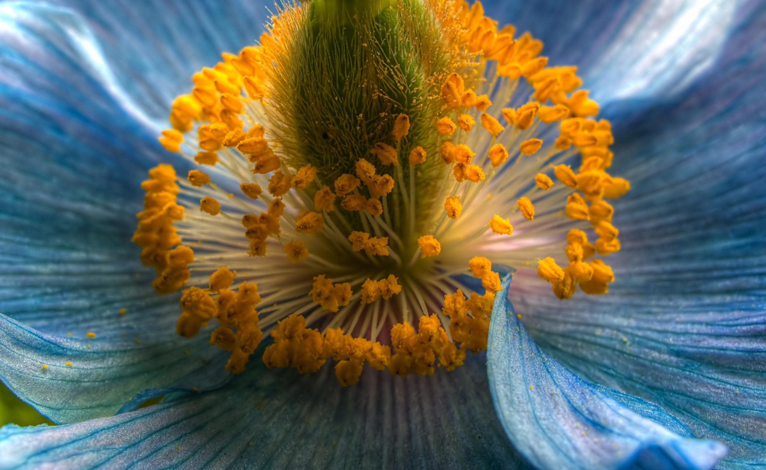 фото картины цветы макросъемка это