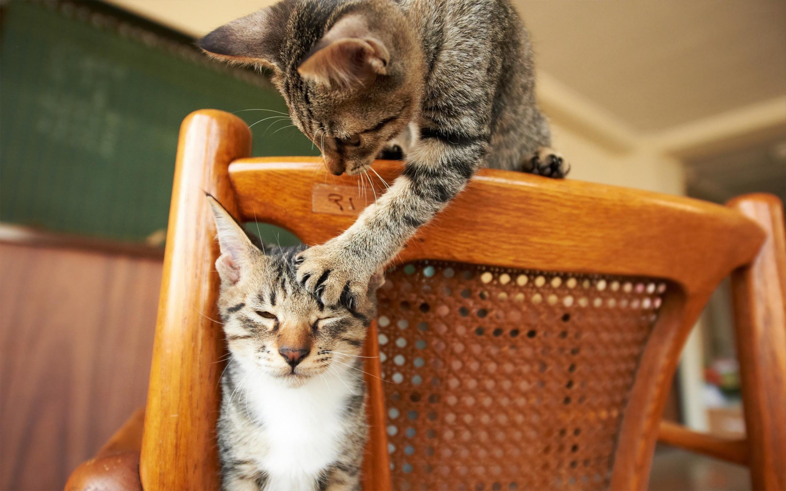 обои для рабочего стола забавных кошек № 606106 бесплатно
