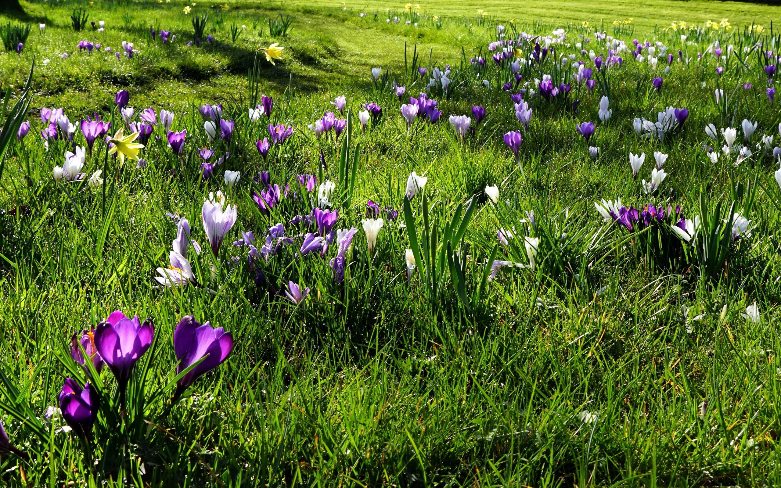 фото цветы весна в полях целом