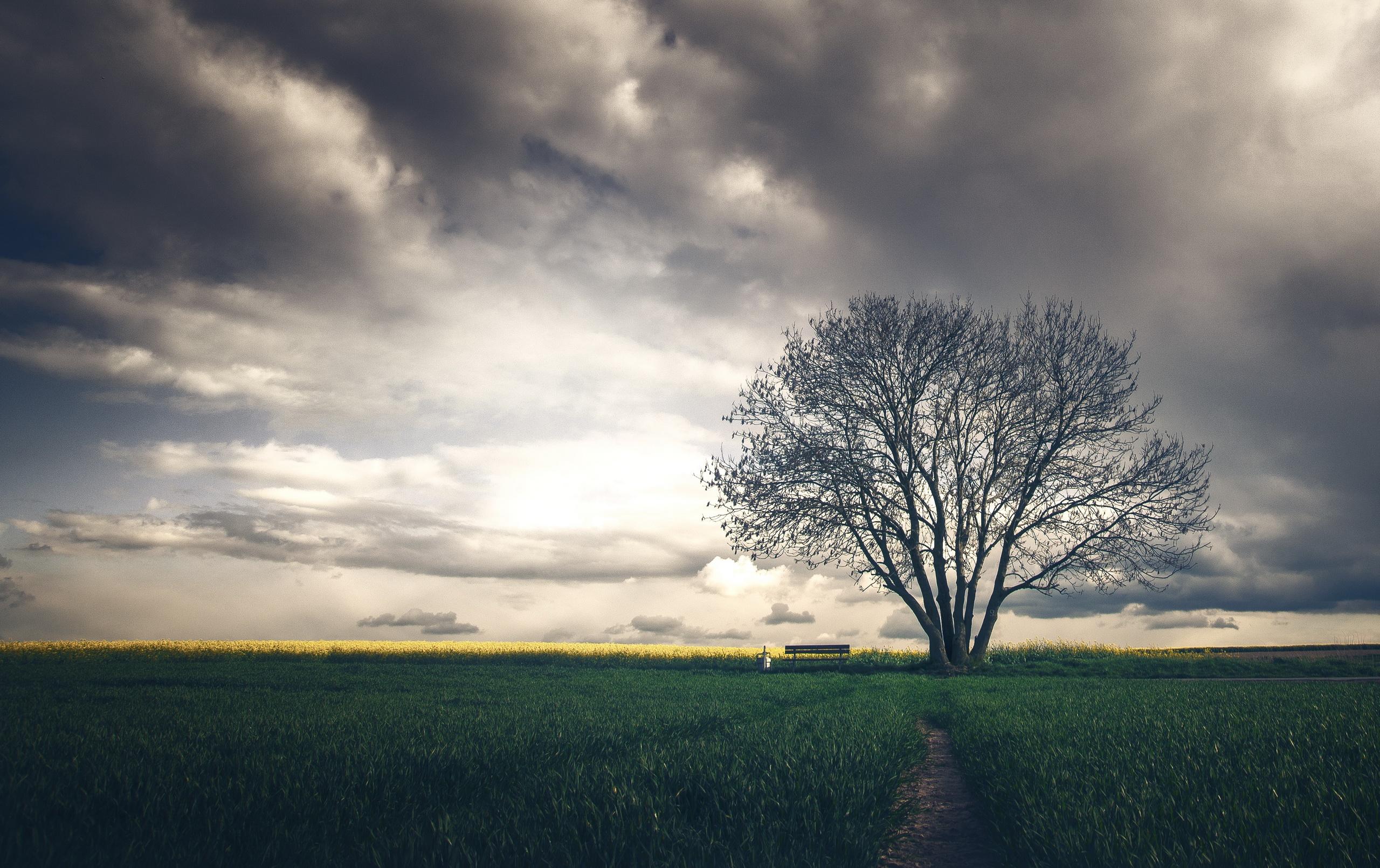 блондинка дерево поле blonde tree field  № 1377197 без смс