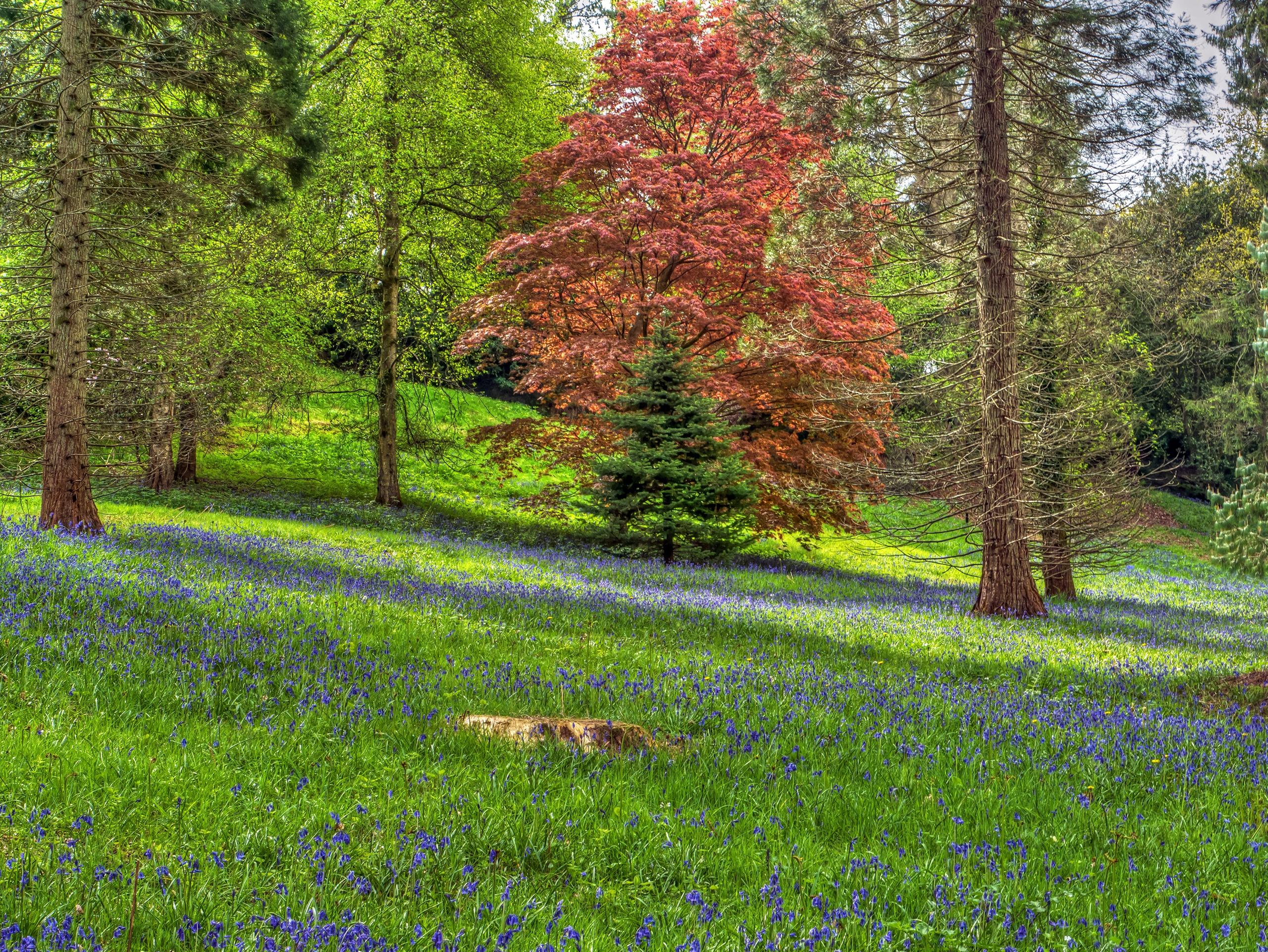 Картинка леса полянка
