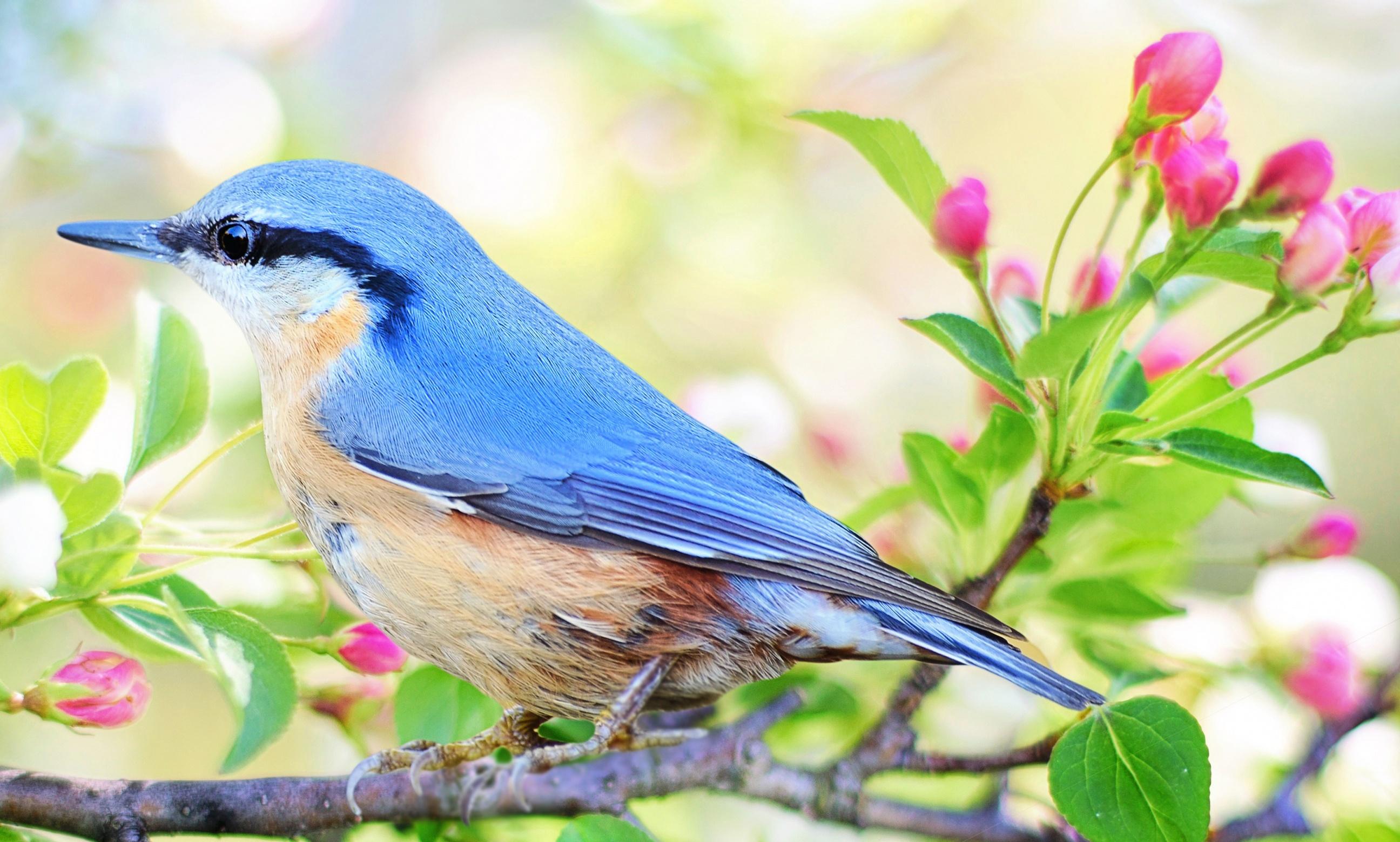 Картинки на рабочий птицы в саду