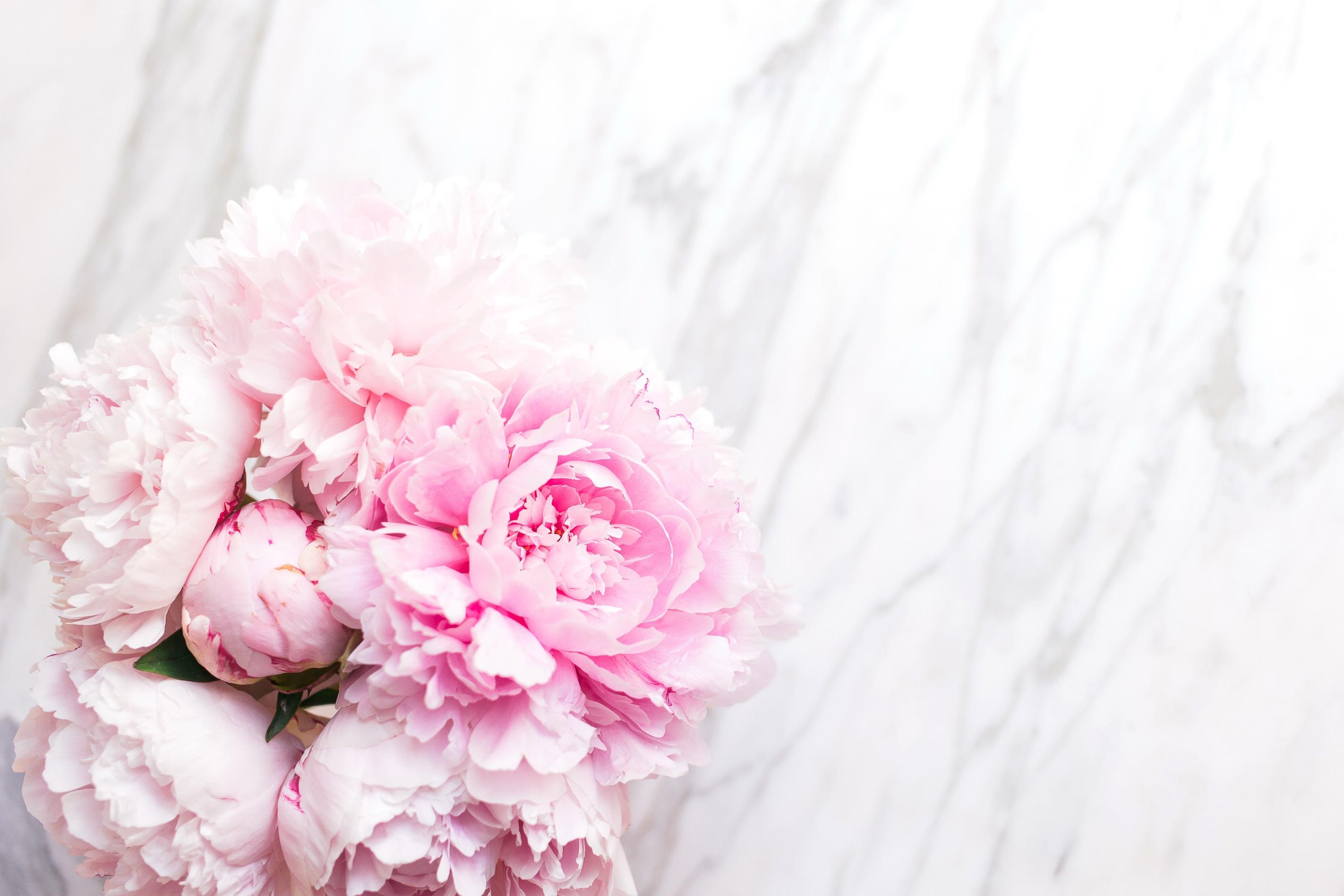 Цветной, картинка цветы пионы нежные