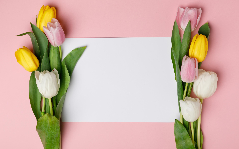 Шаблон открытки с тюльпанами