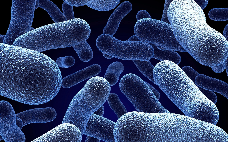 Бактериальные заболевания картинки