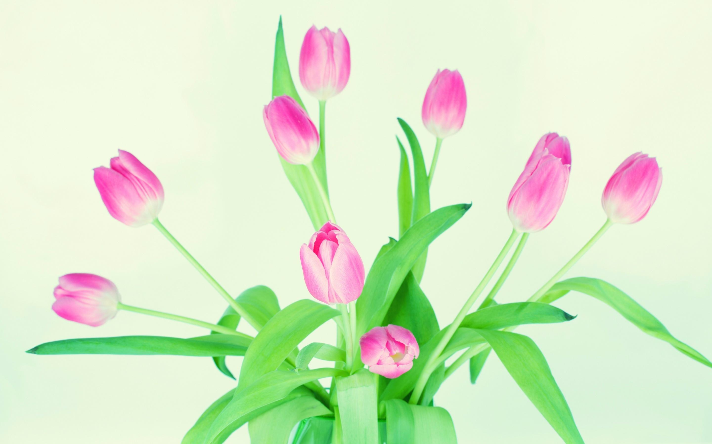 букет,тюльпаны,листья  № 415684 без смс