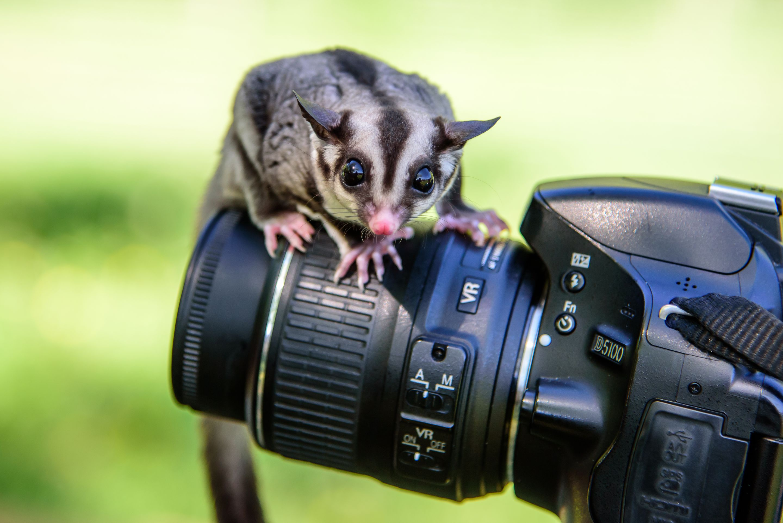 Картинка фотоаппарата прикол