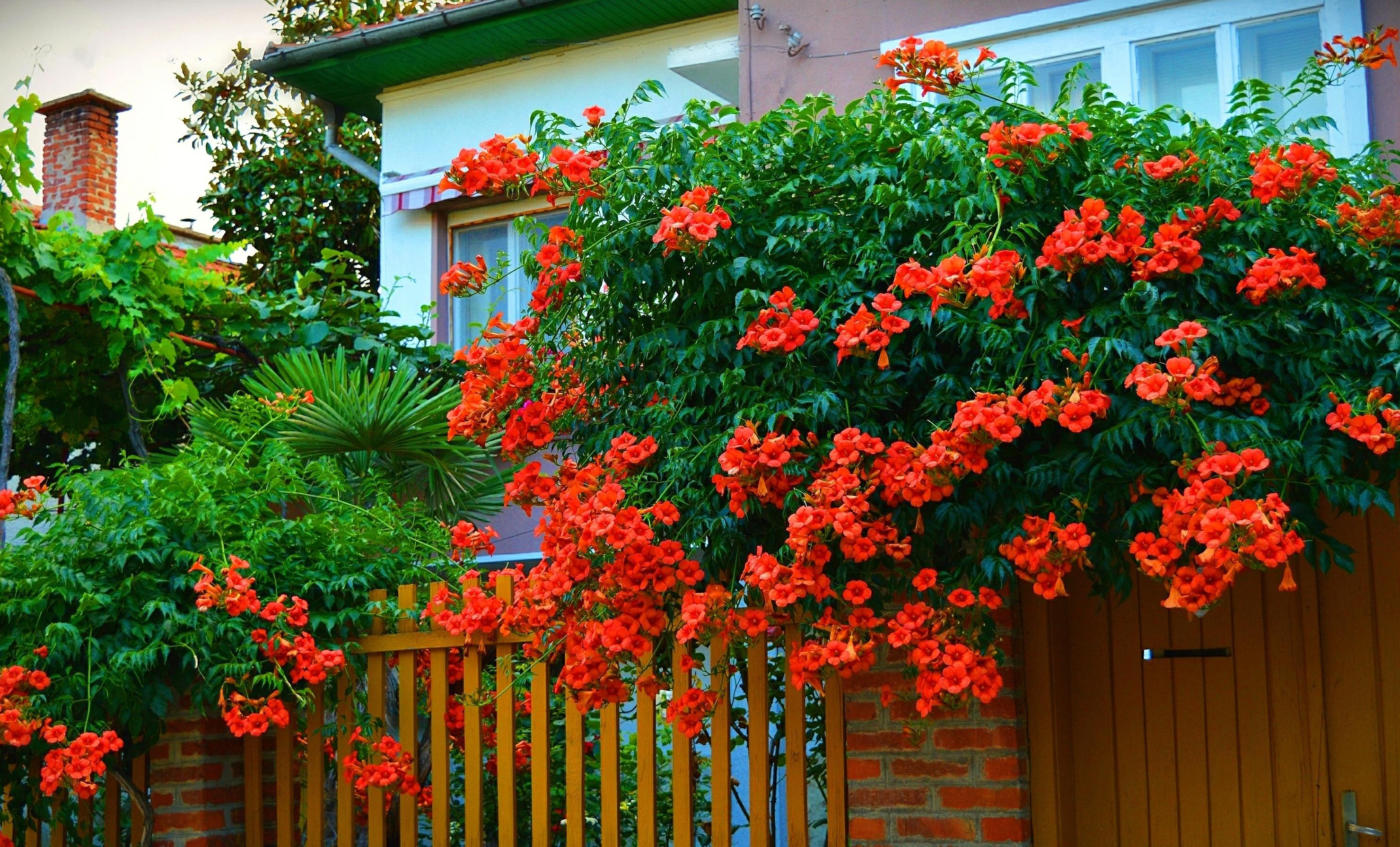 Все виды вьющихся цветов фото