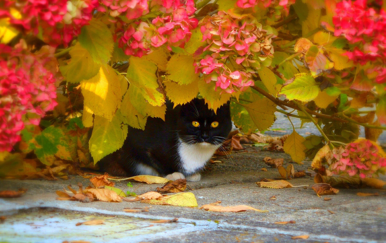 кошка осень листва  № 3898487  скачать