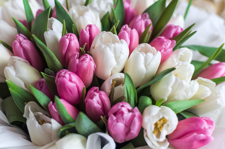 букет тюльпанов картинки фото мемориале