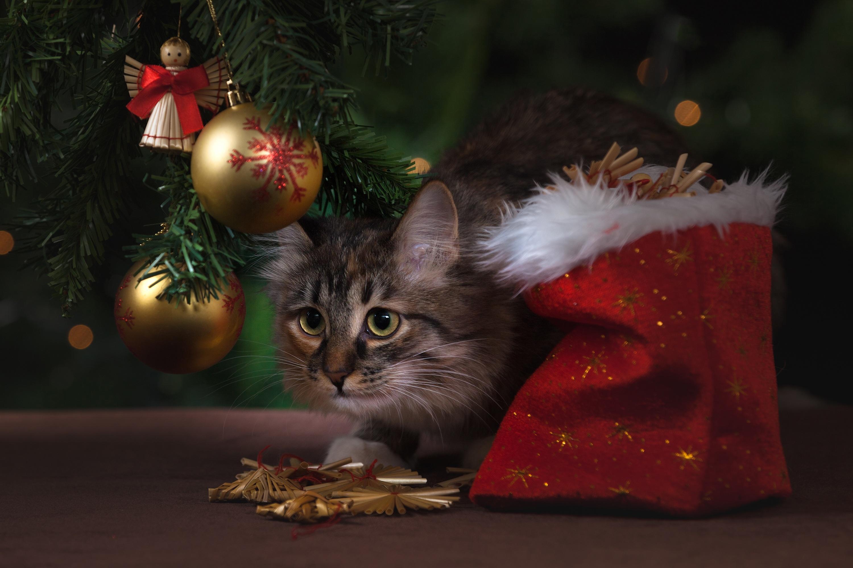 Картинки новый год котики, днем рождения