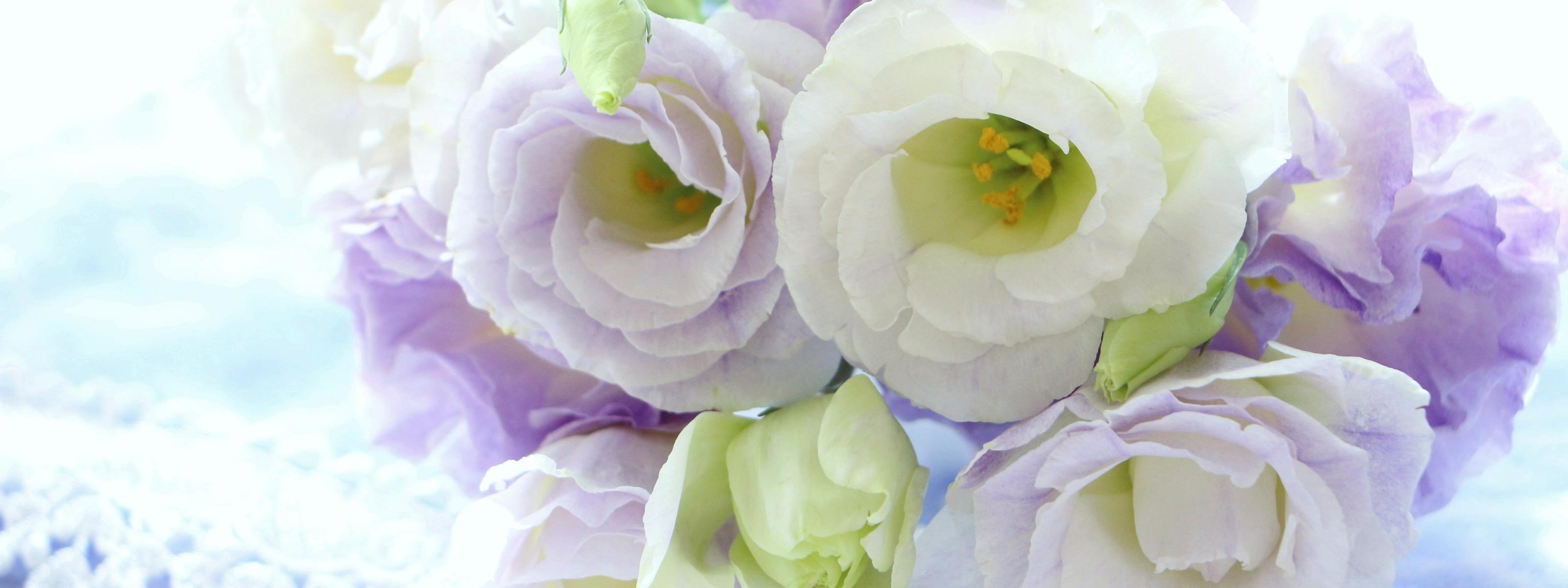цветы эустома обои на рабочий стол