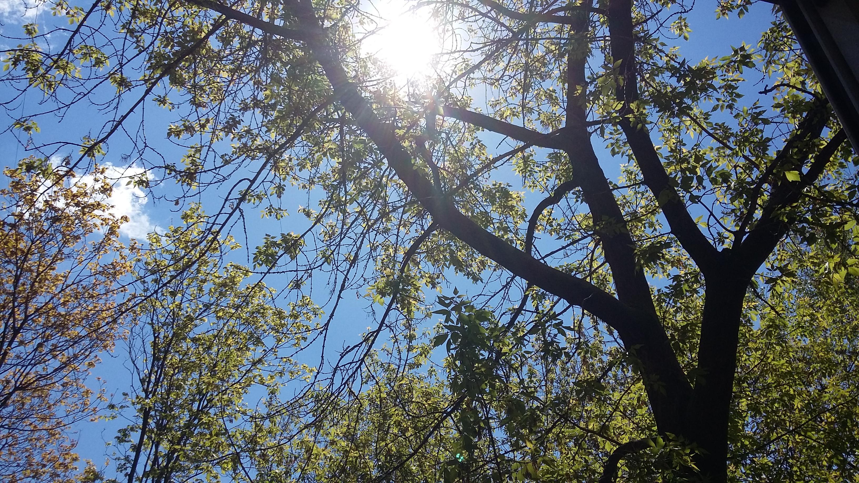 предсказание фото бегут деревья за окном для мужчин
