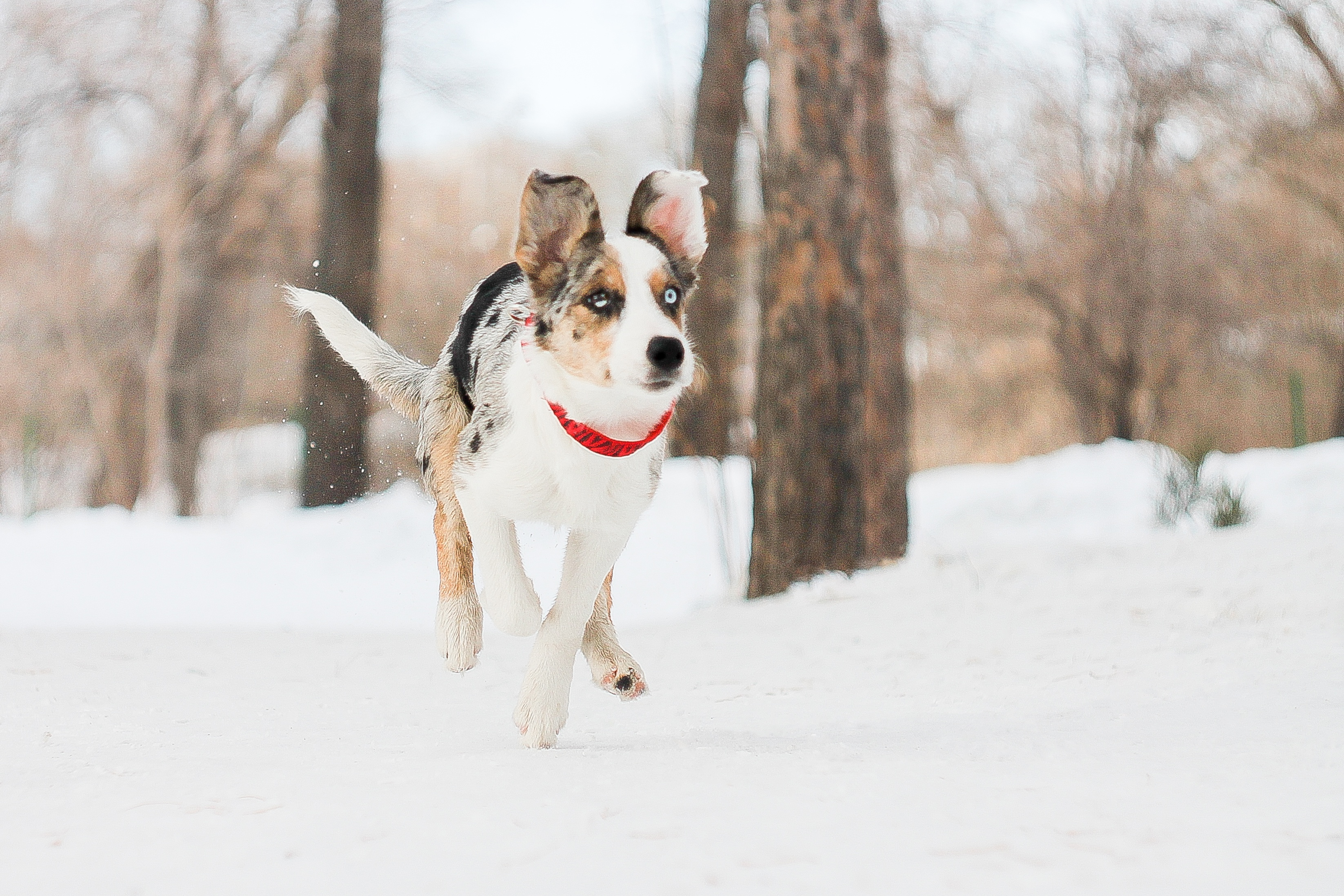 щенок снег puppy snow  № 2001774  скачать