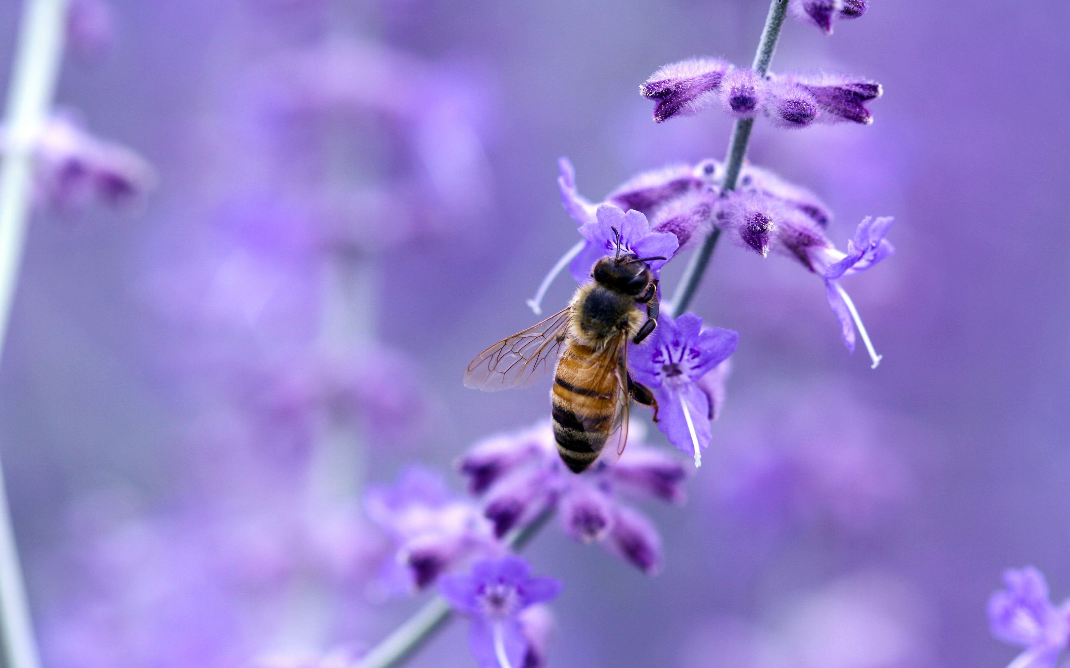 природа цветы насекомое пчела  № 3105893 бесплатно