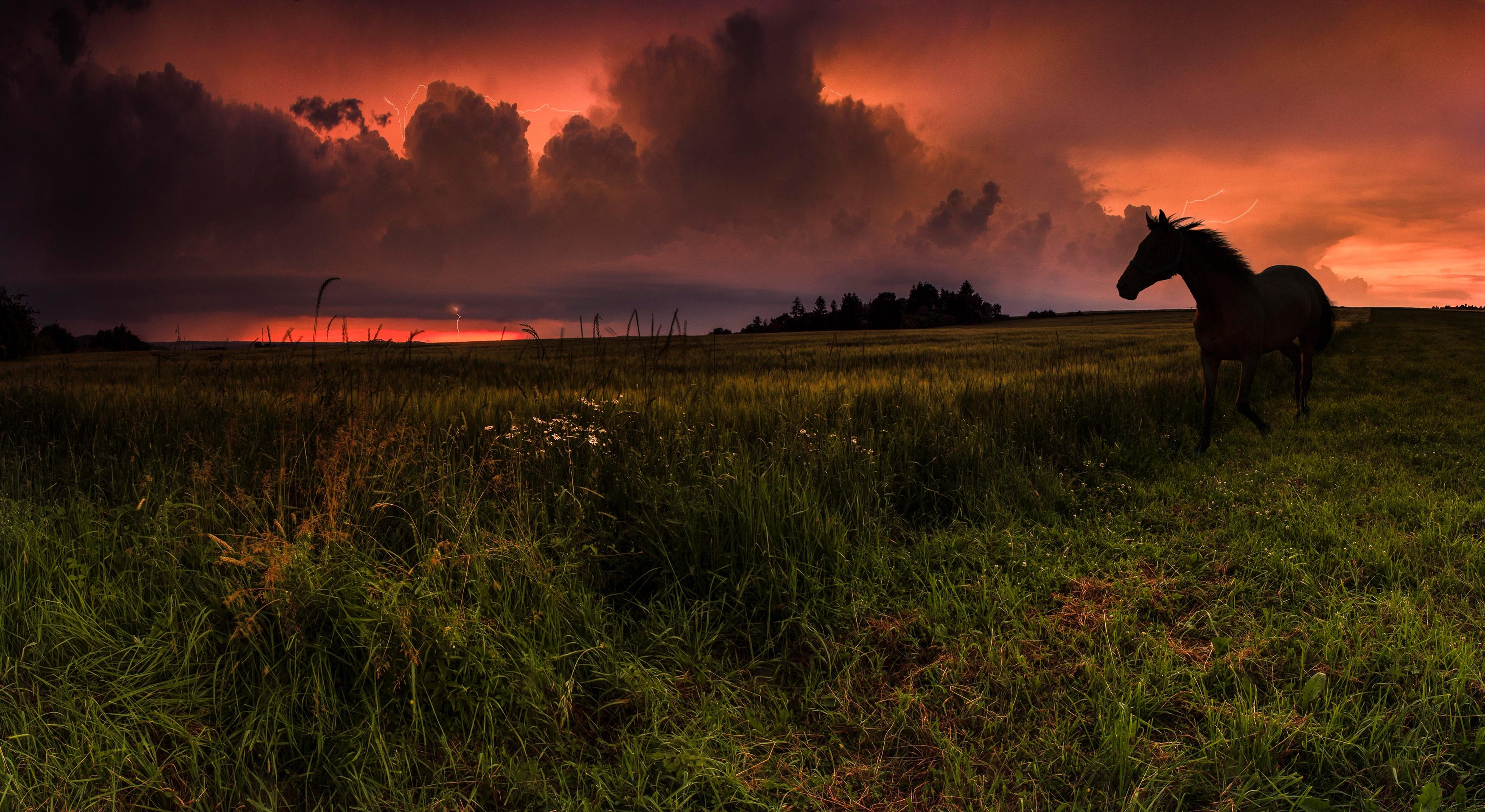 лошадь, трава, закат  № 2639  скачать