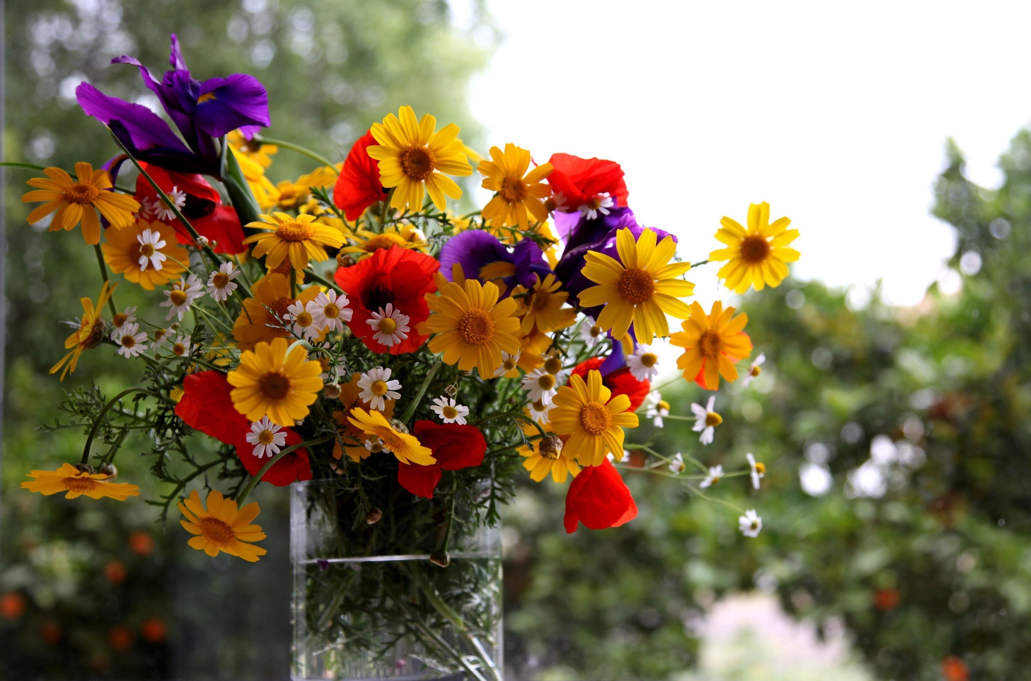 Картинки лето красивые цветы