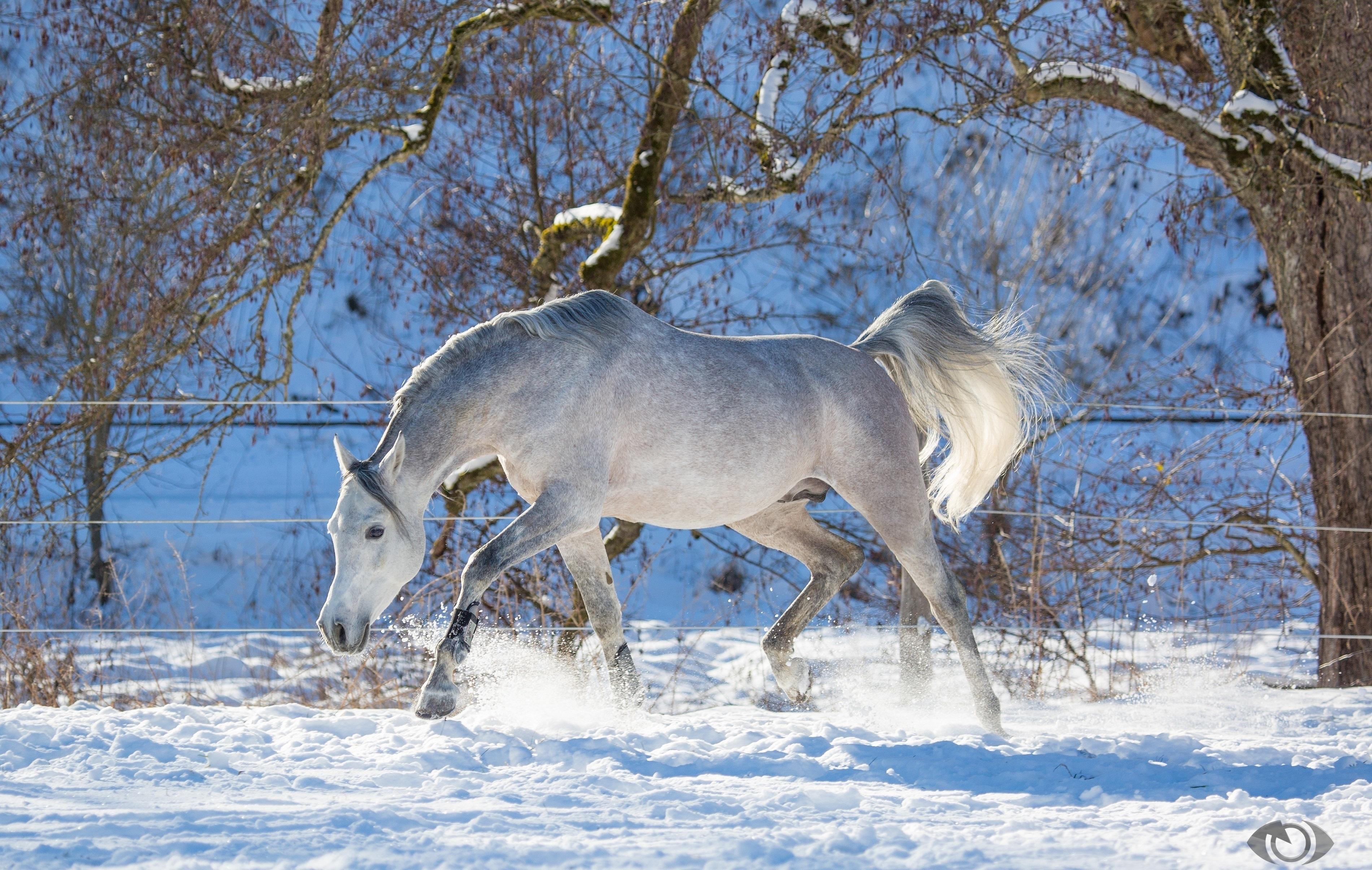 зимняя лошадь обои на рабочий стол № 511119  скачать