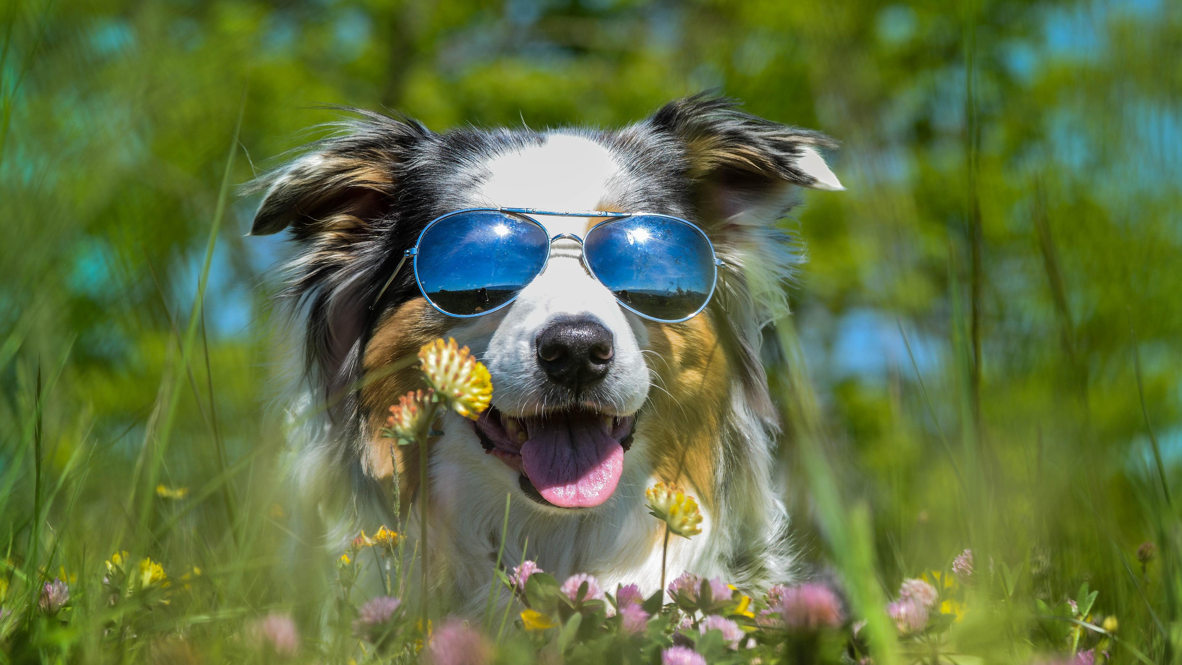 Картинки лето собака