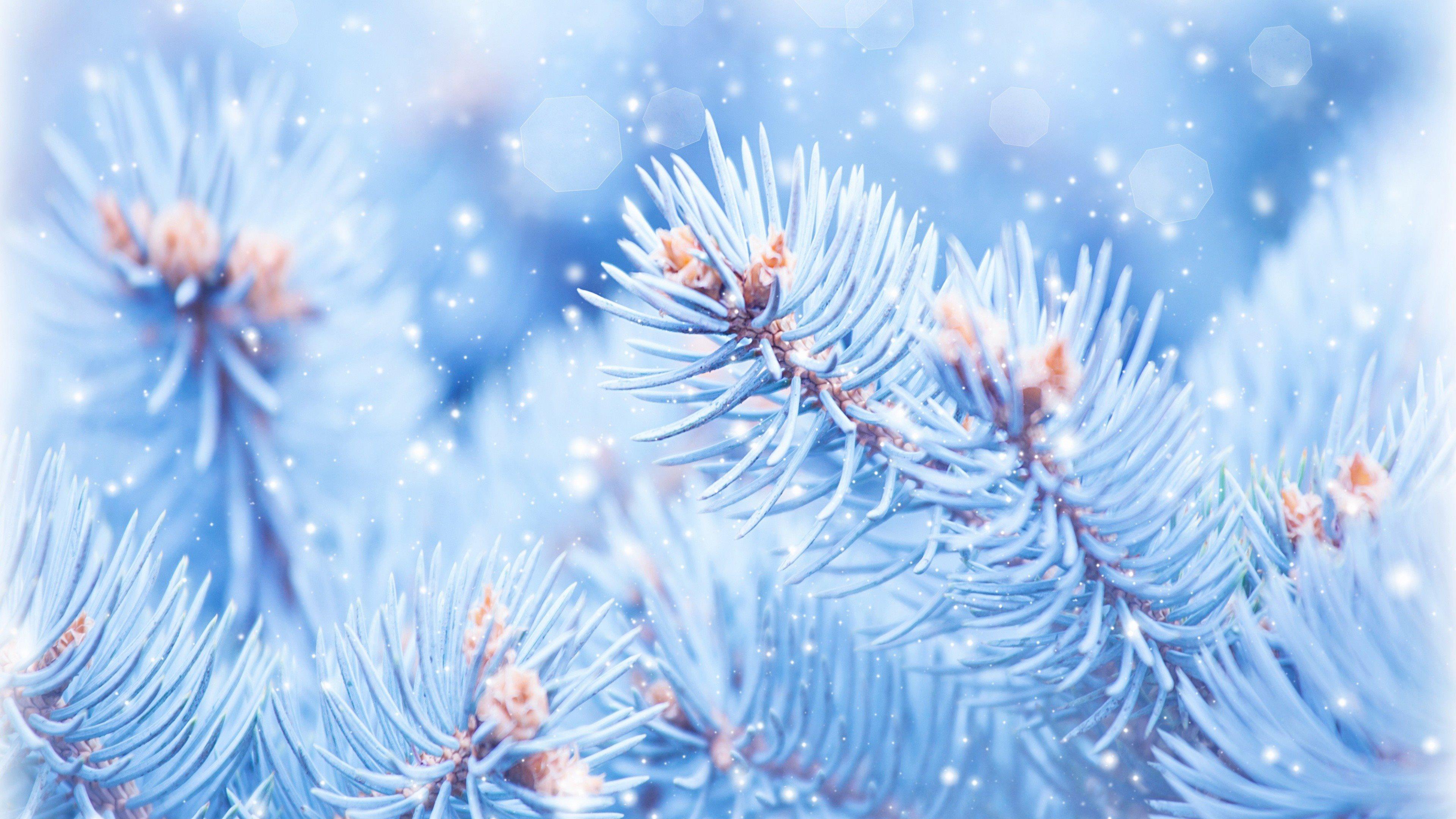 природа ветка снег  № 3089959 бесплатно