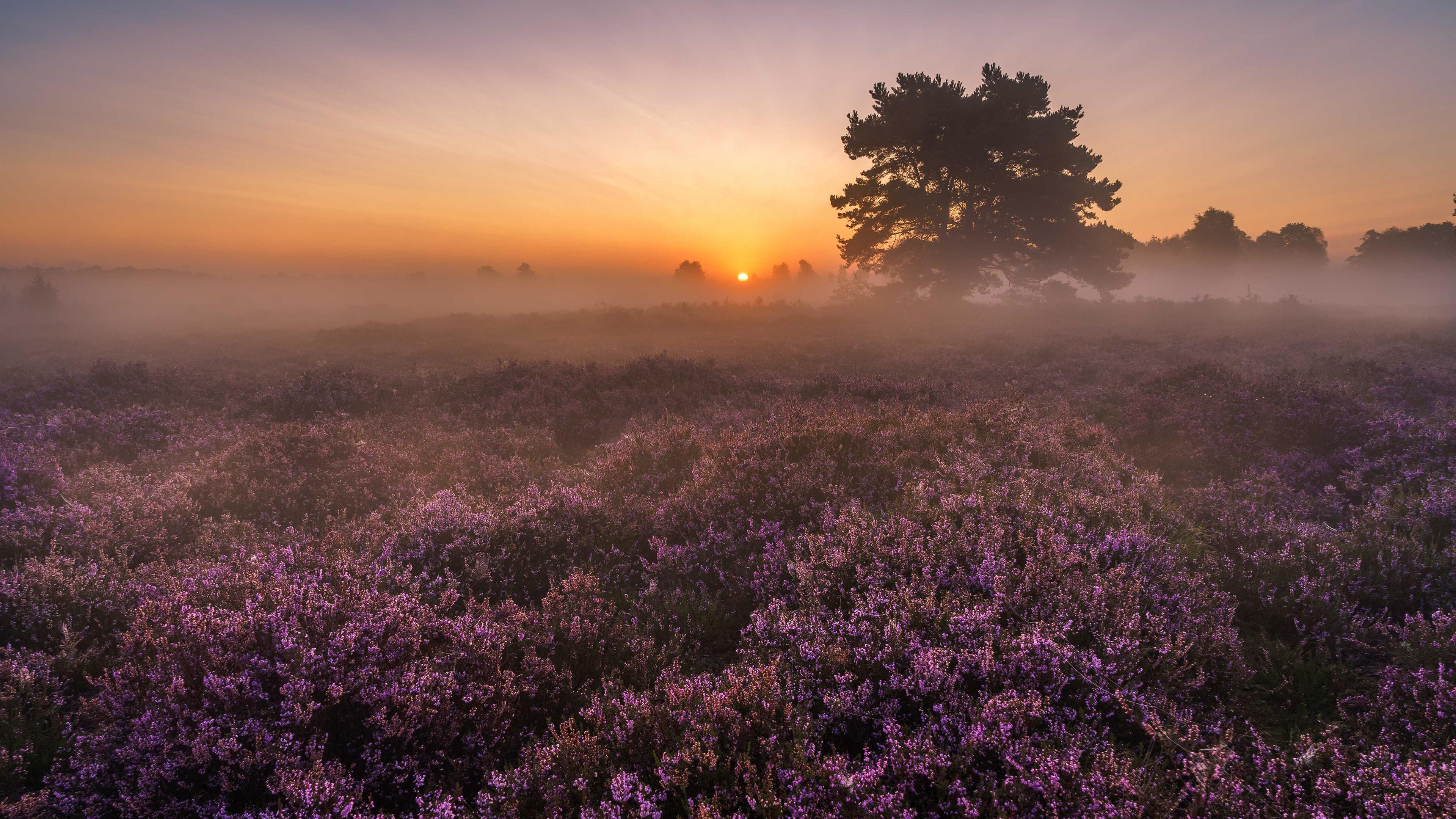 поле цветы рассвет field flowers dawn  № 3837027 без смс