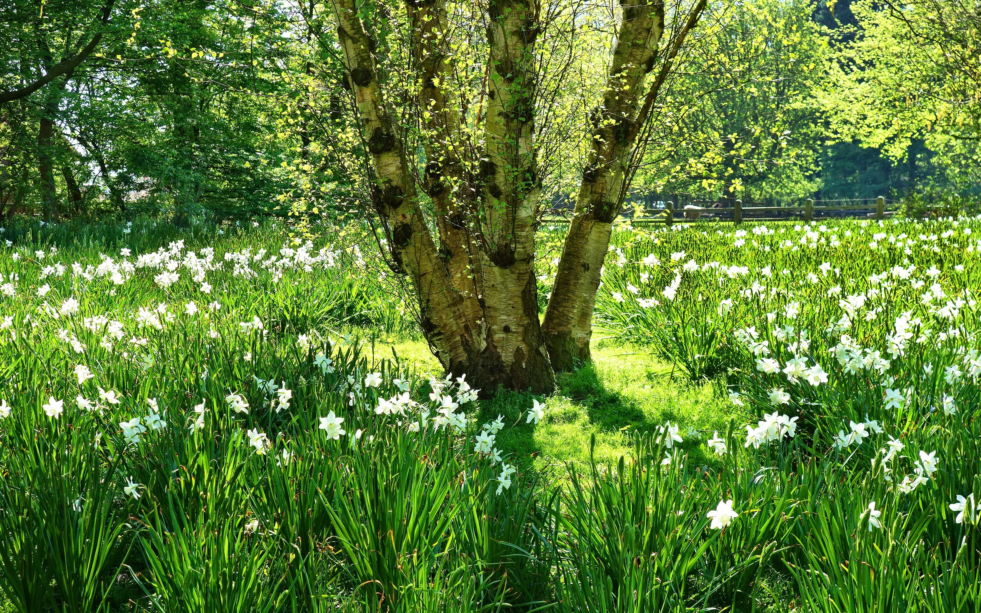Картинки деревья цветы трава вода темно-зеленые