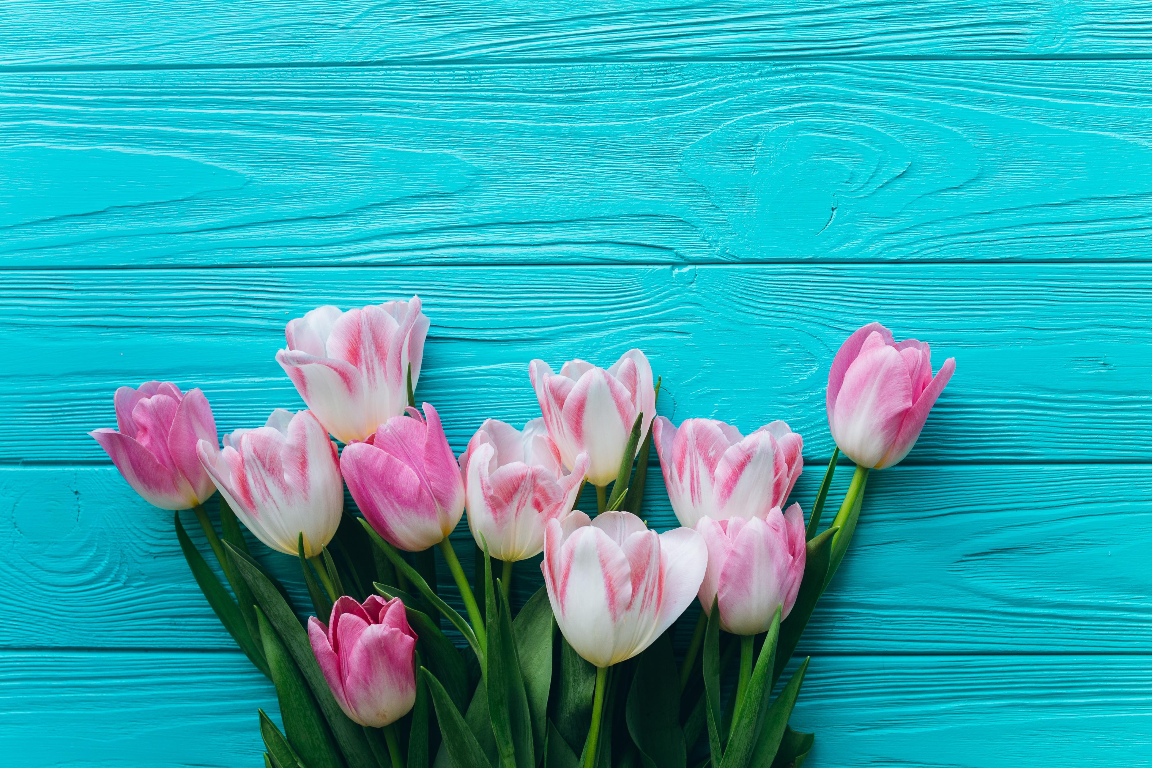 розовые цветы на голубом фоне фото легко незаметно