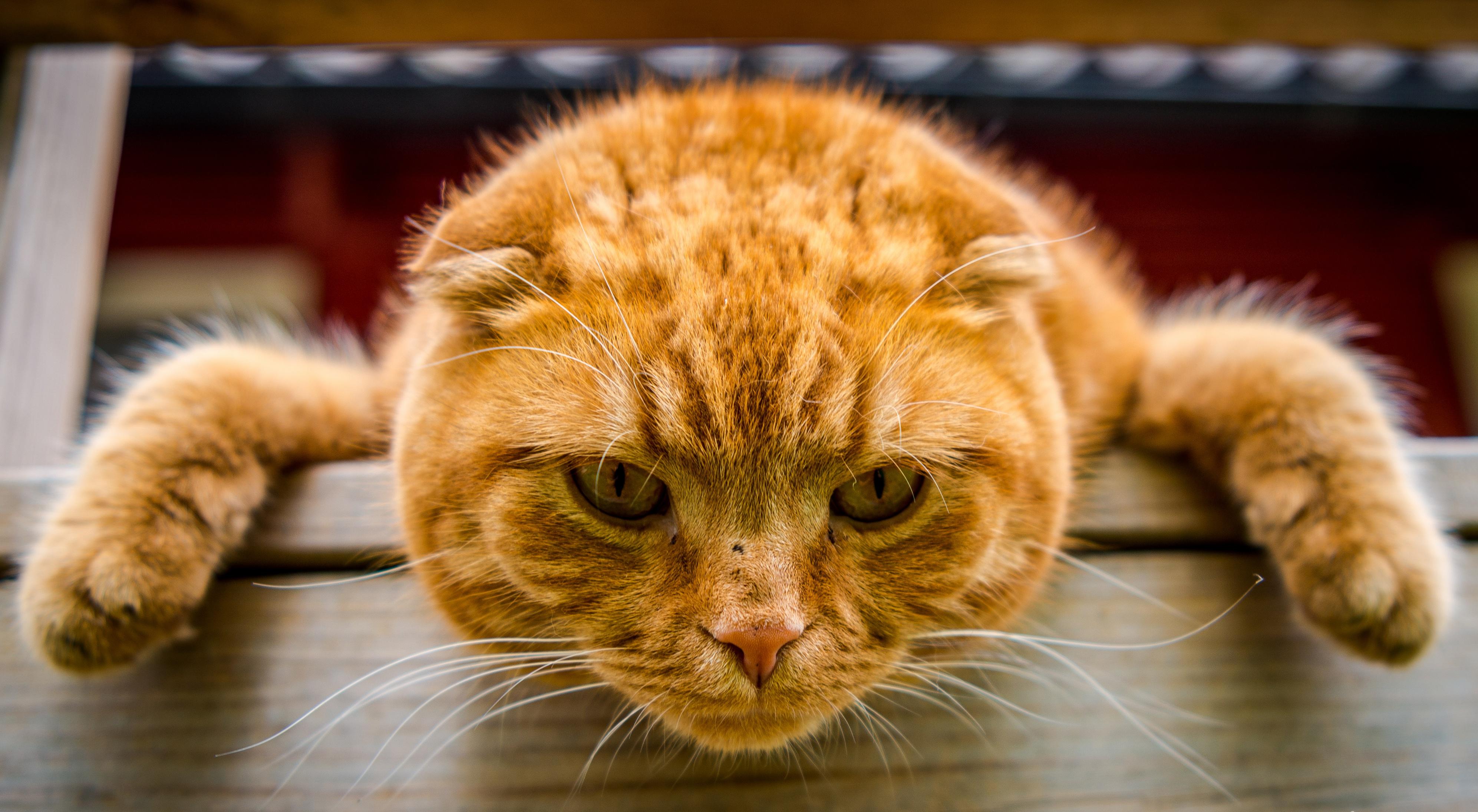 вдруг картинки прикольные кошки большое разрешение приехали