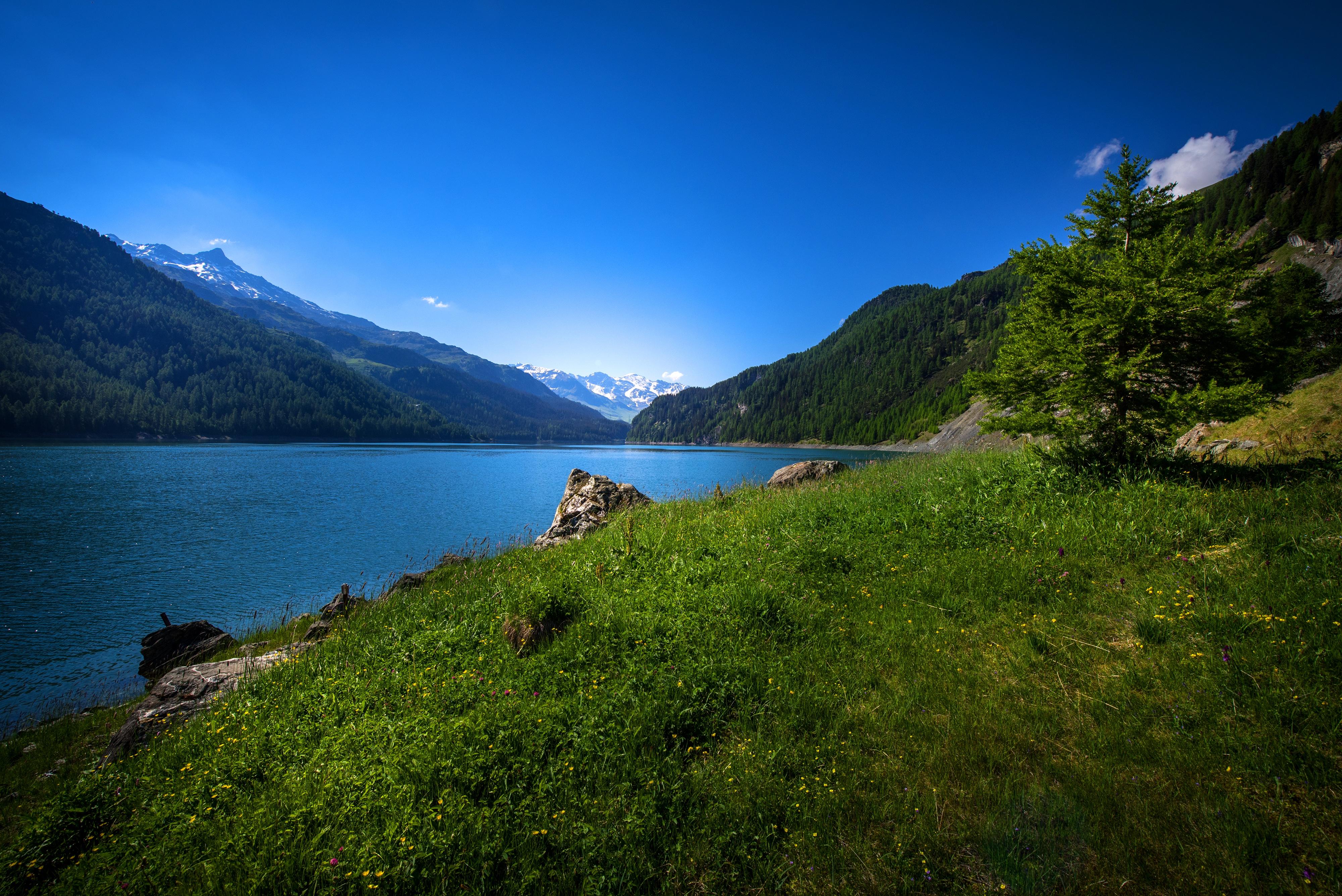 Швейцария Горы река деревья трава  № 183952 без смс