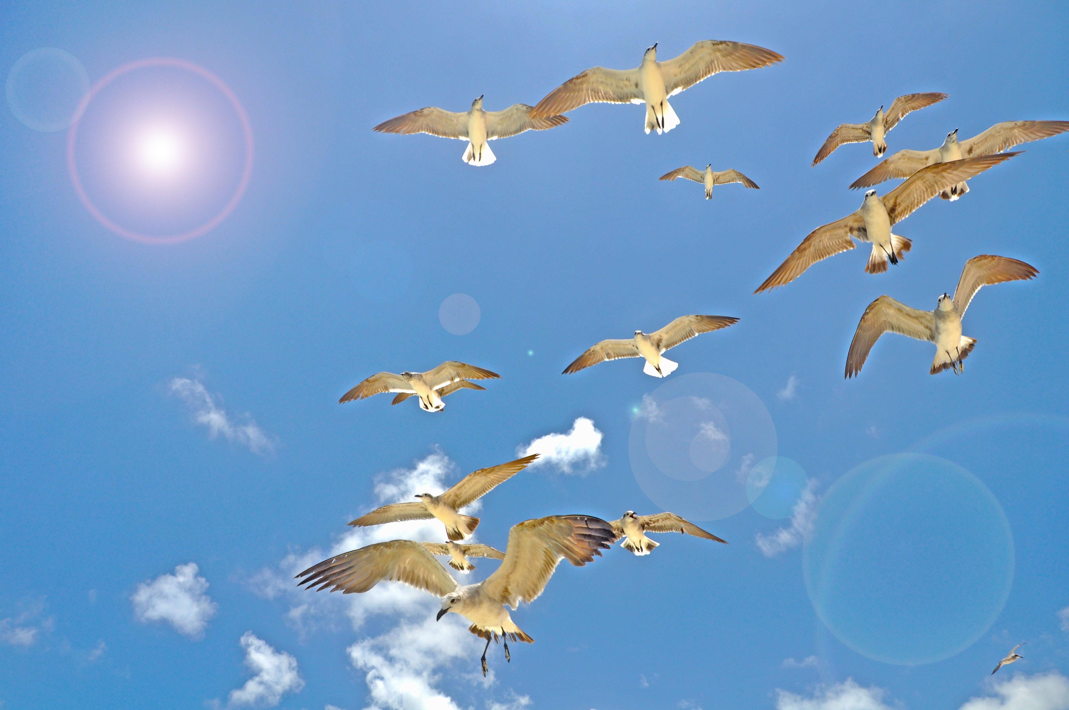 картинки летать в небе как птицы отобрали самые