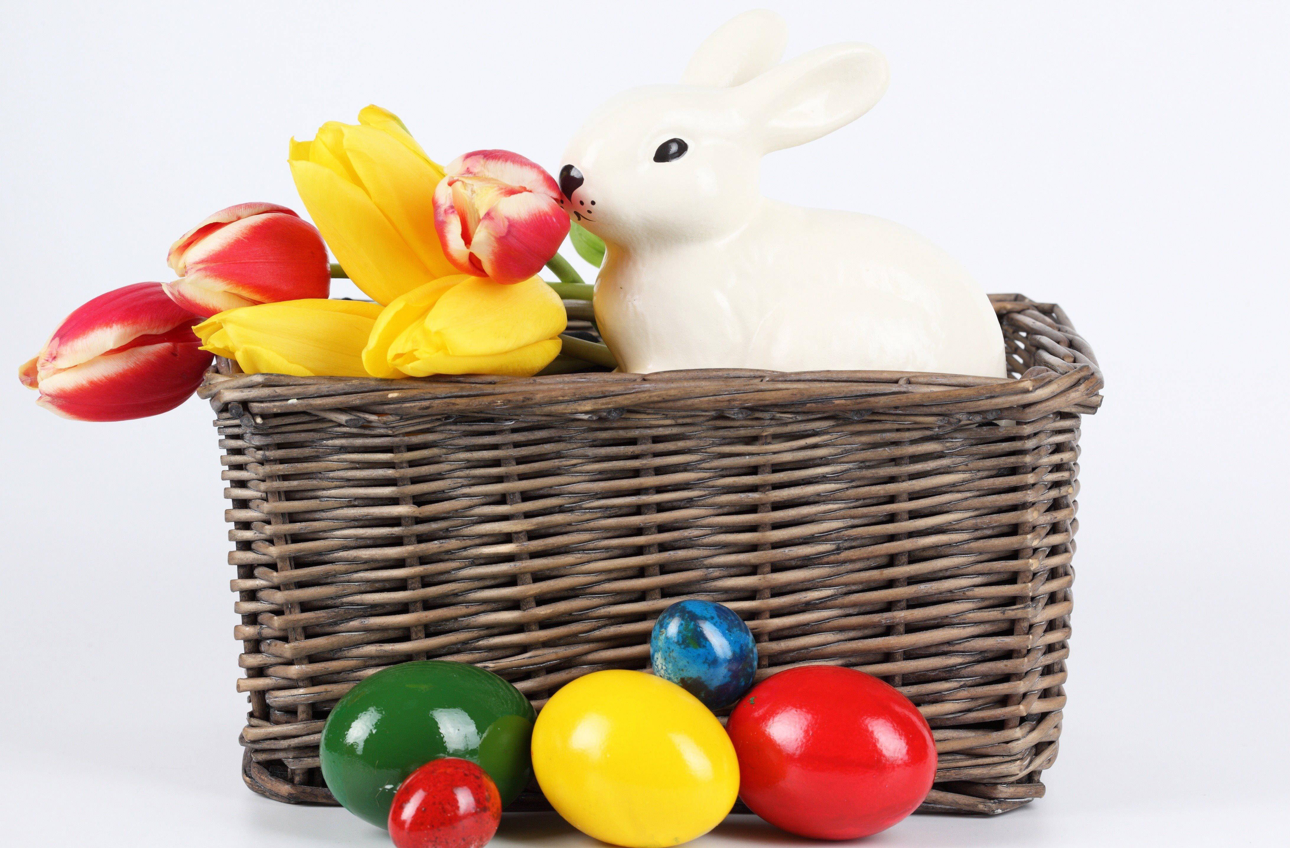 кролик с тюльпанами  № 1144643  скачать