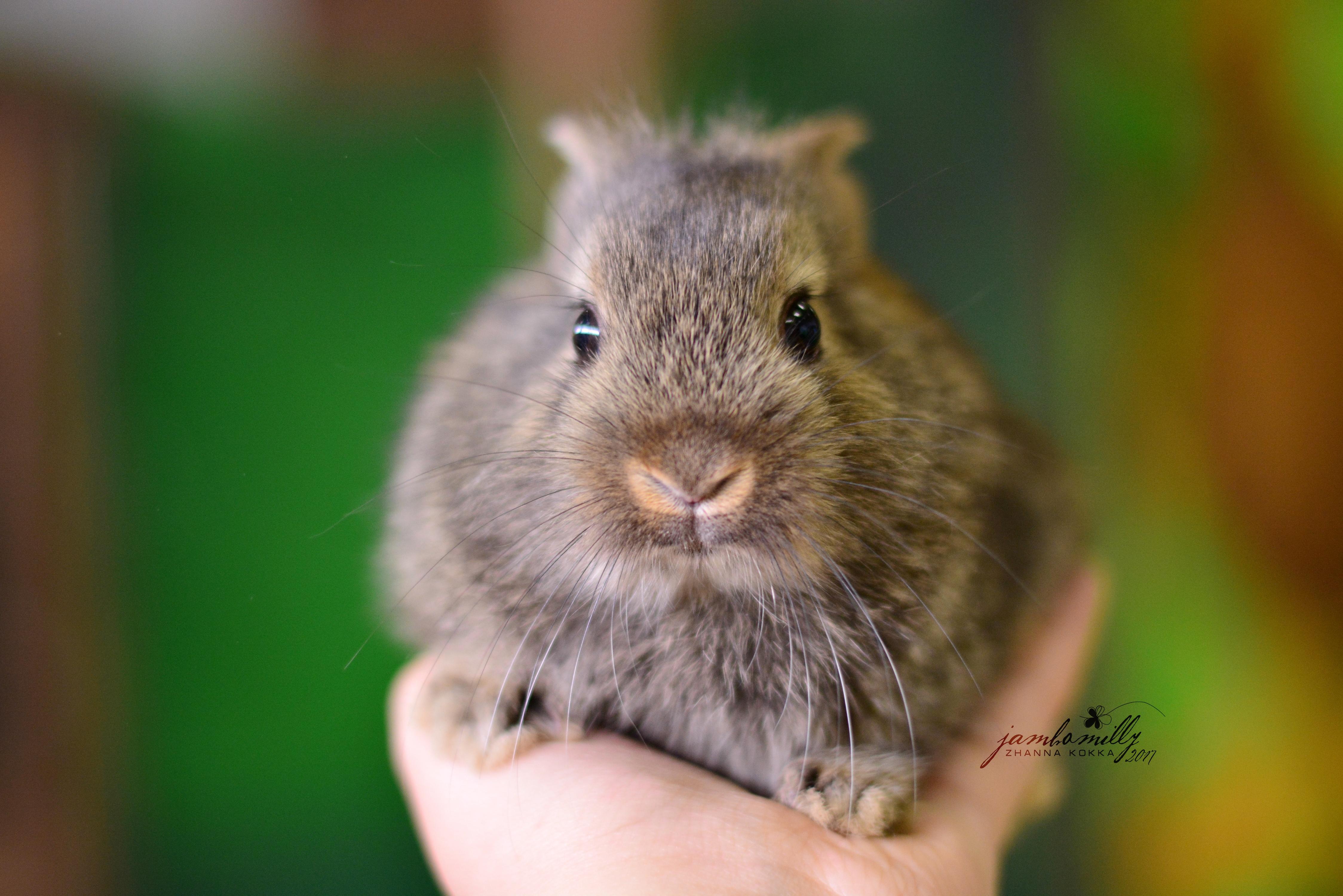 Кролик макро  № 3207807 загрузить