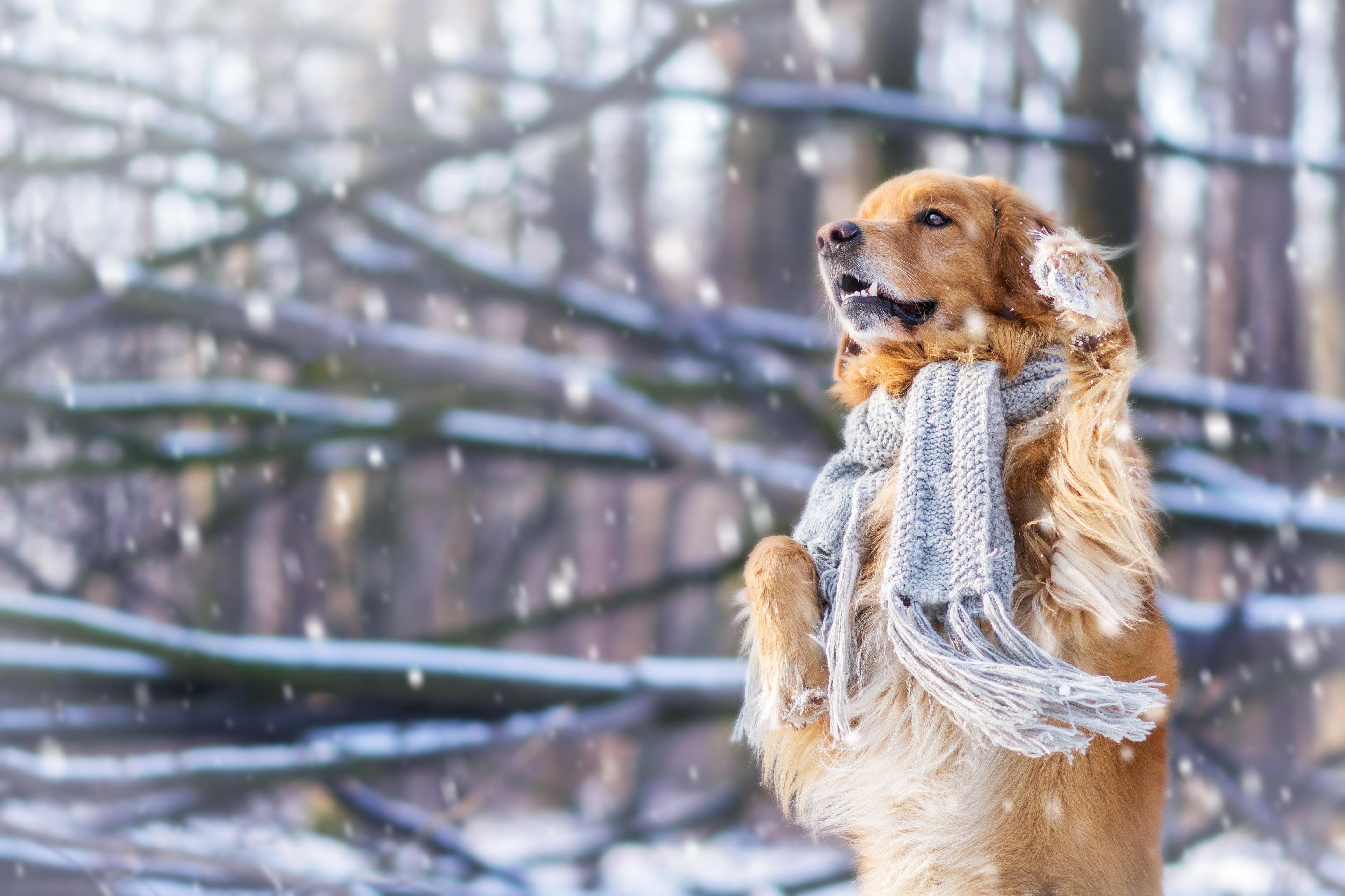 собачки на зимней прогулке  № 1978698 без смс