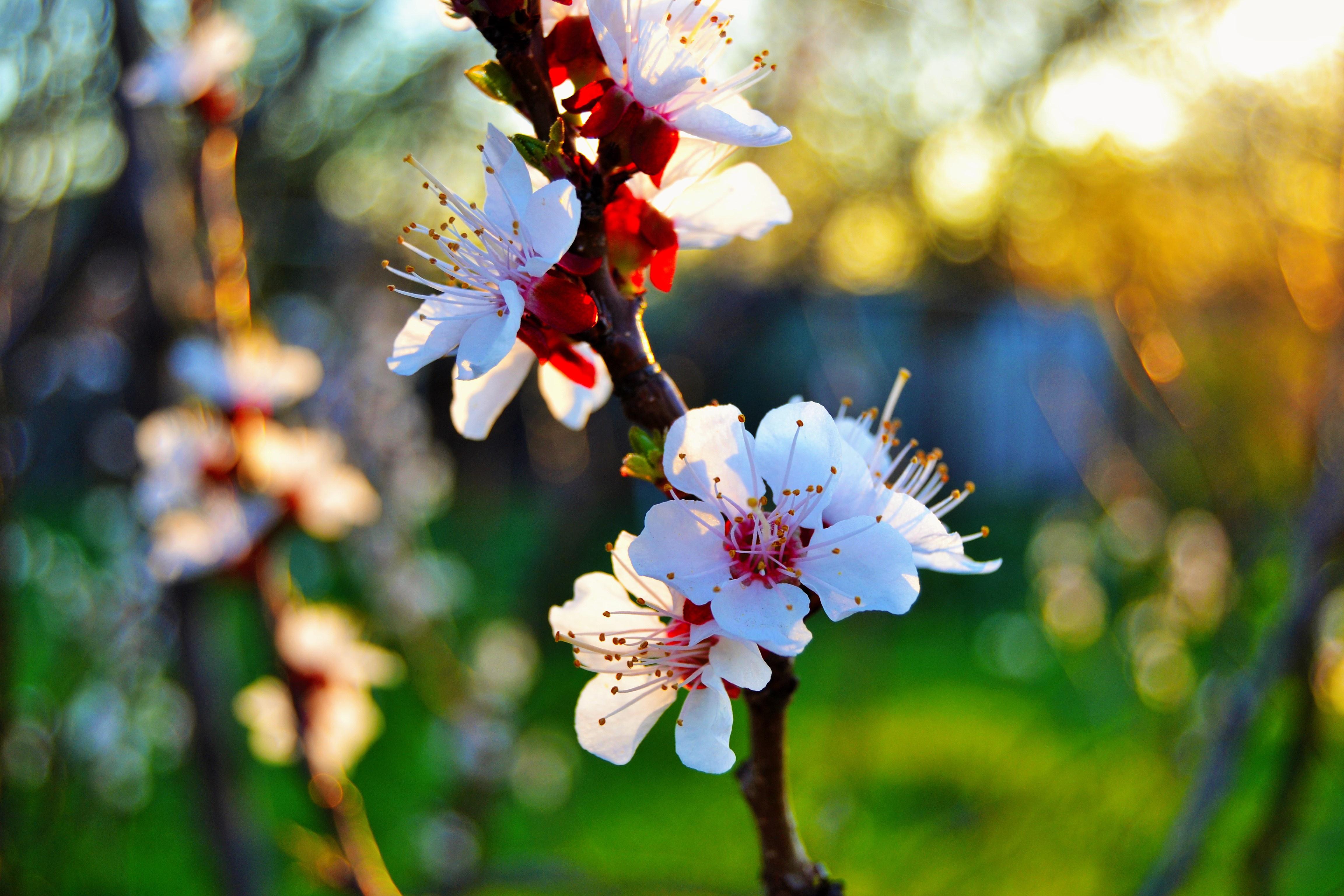 обои цветущие деревья для рабочего стола № 431676 бесплатно