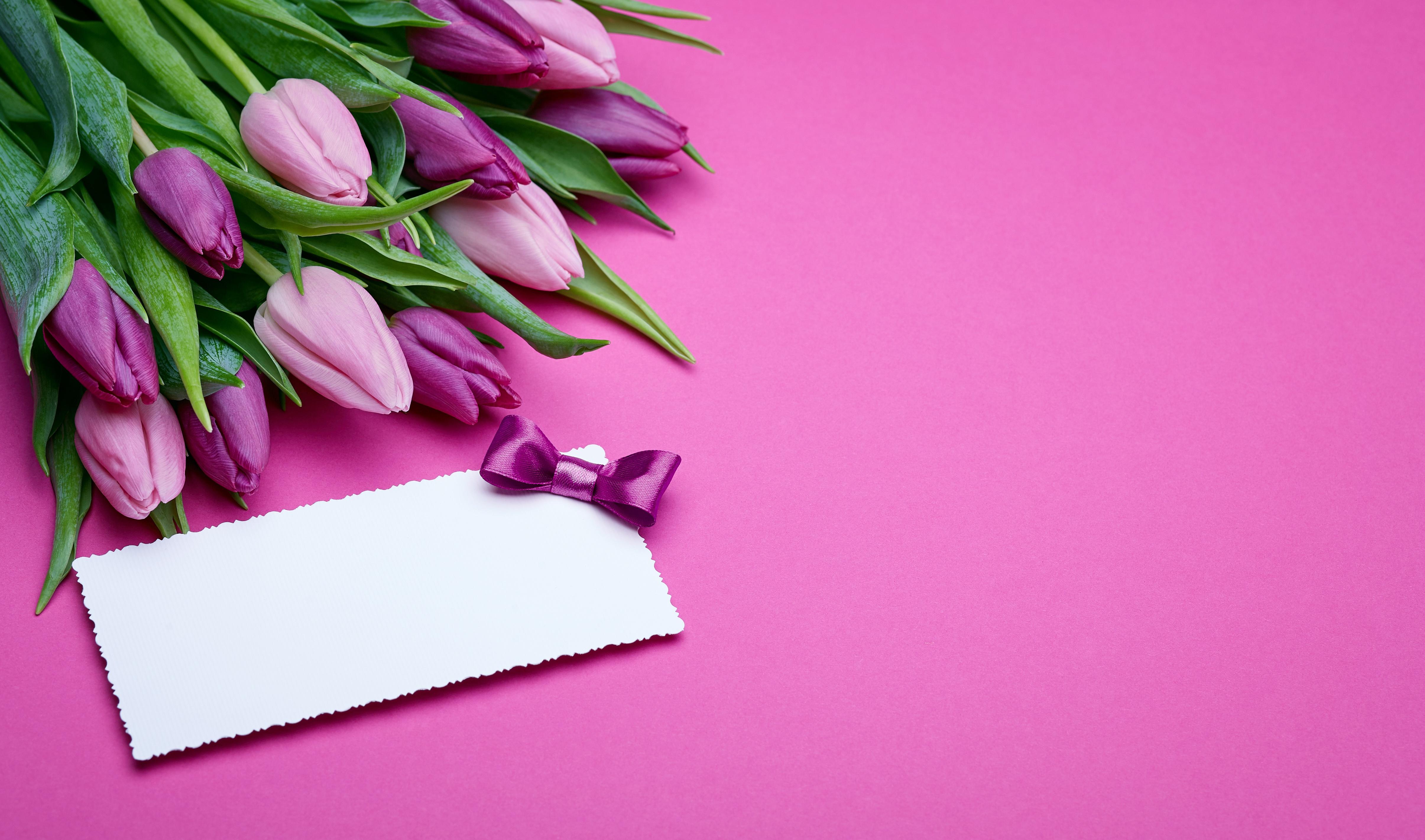 Открытки, фон для поздравления с тюльпанами