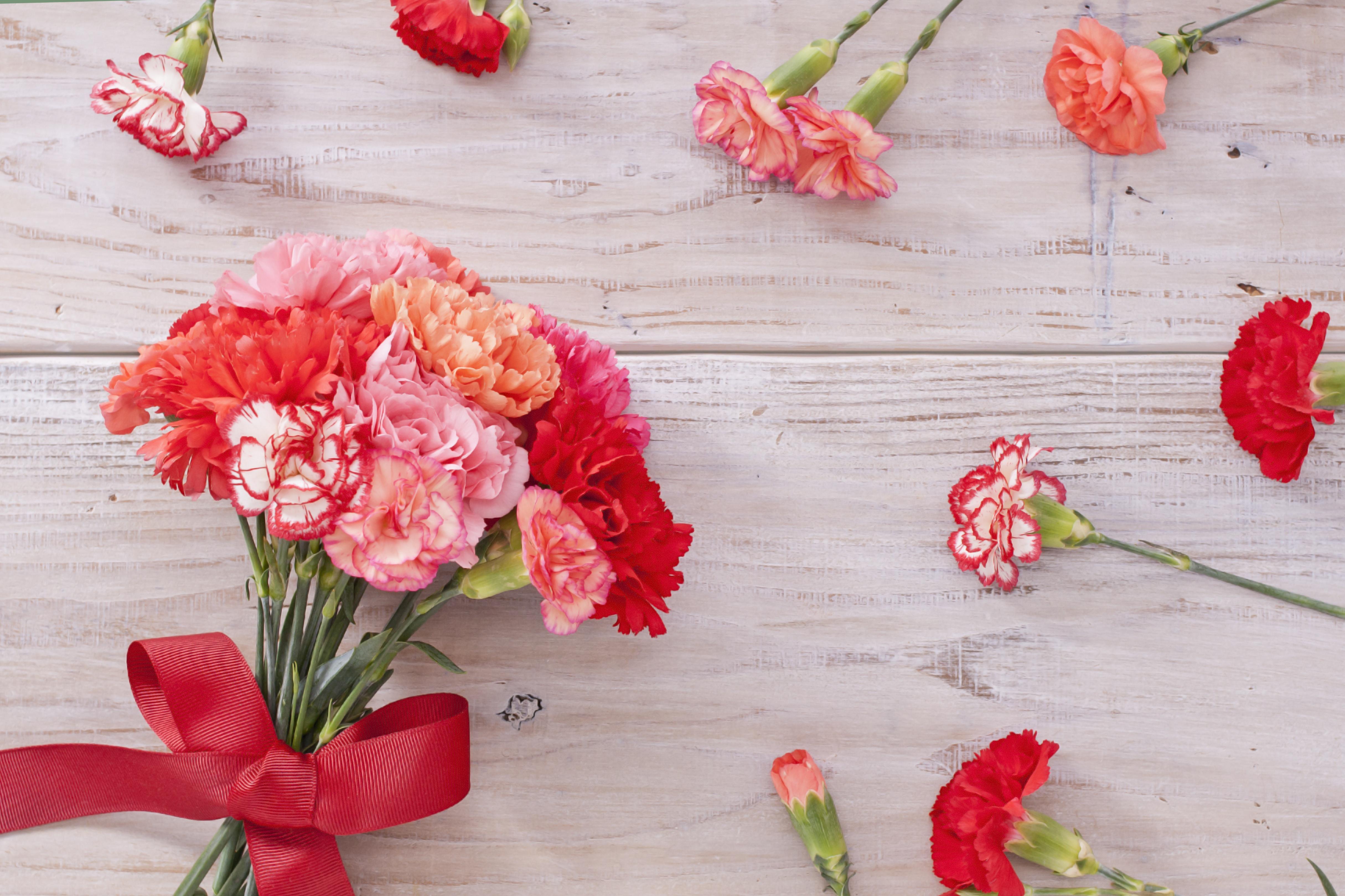 года картинки гвоздики цветы для фона открытки широко распространена