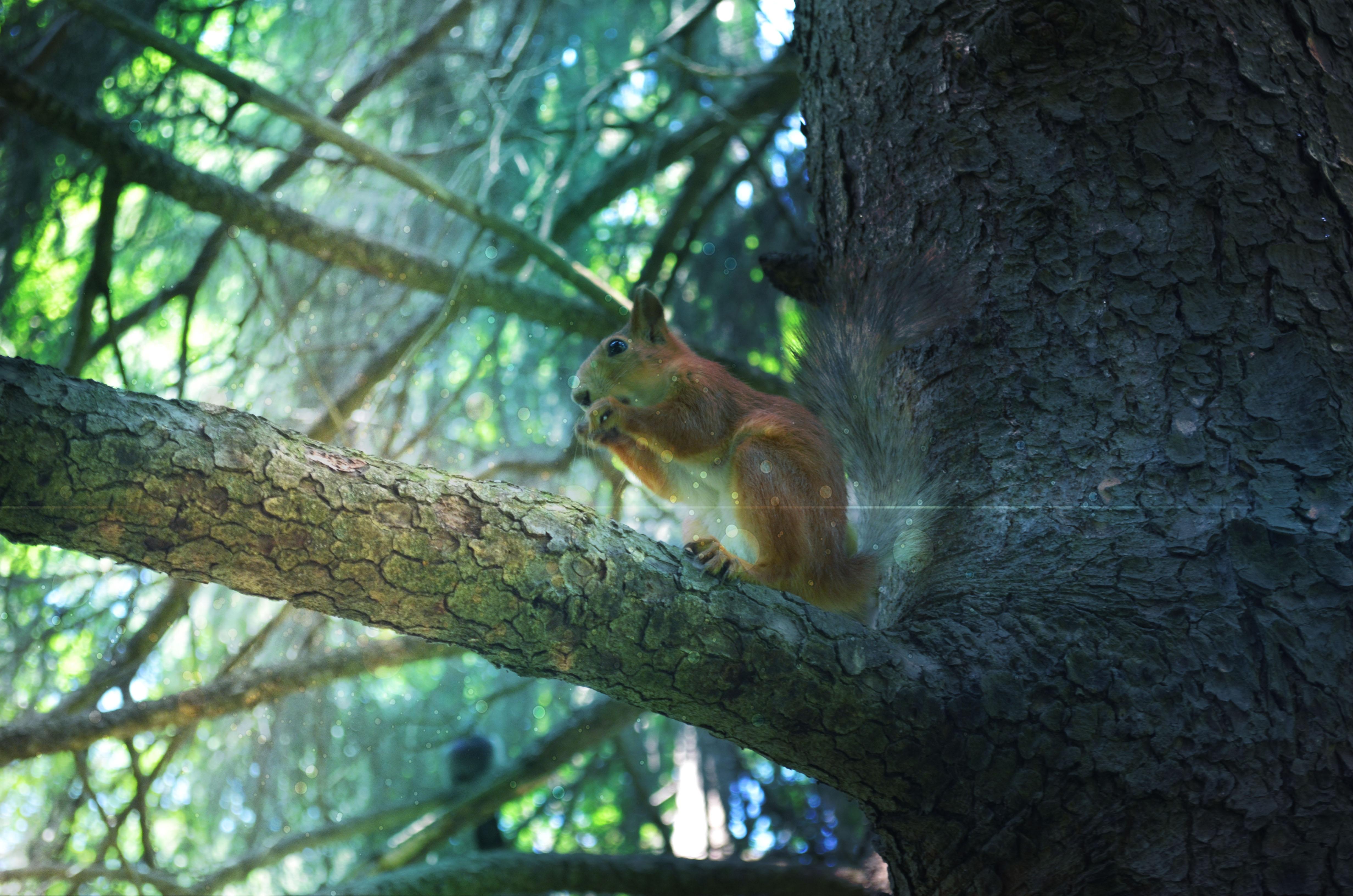 природа животные белка nature animals protein  № 1115636 загрузить