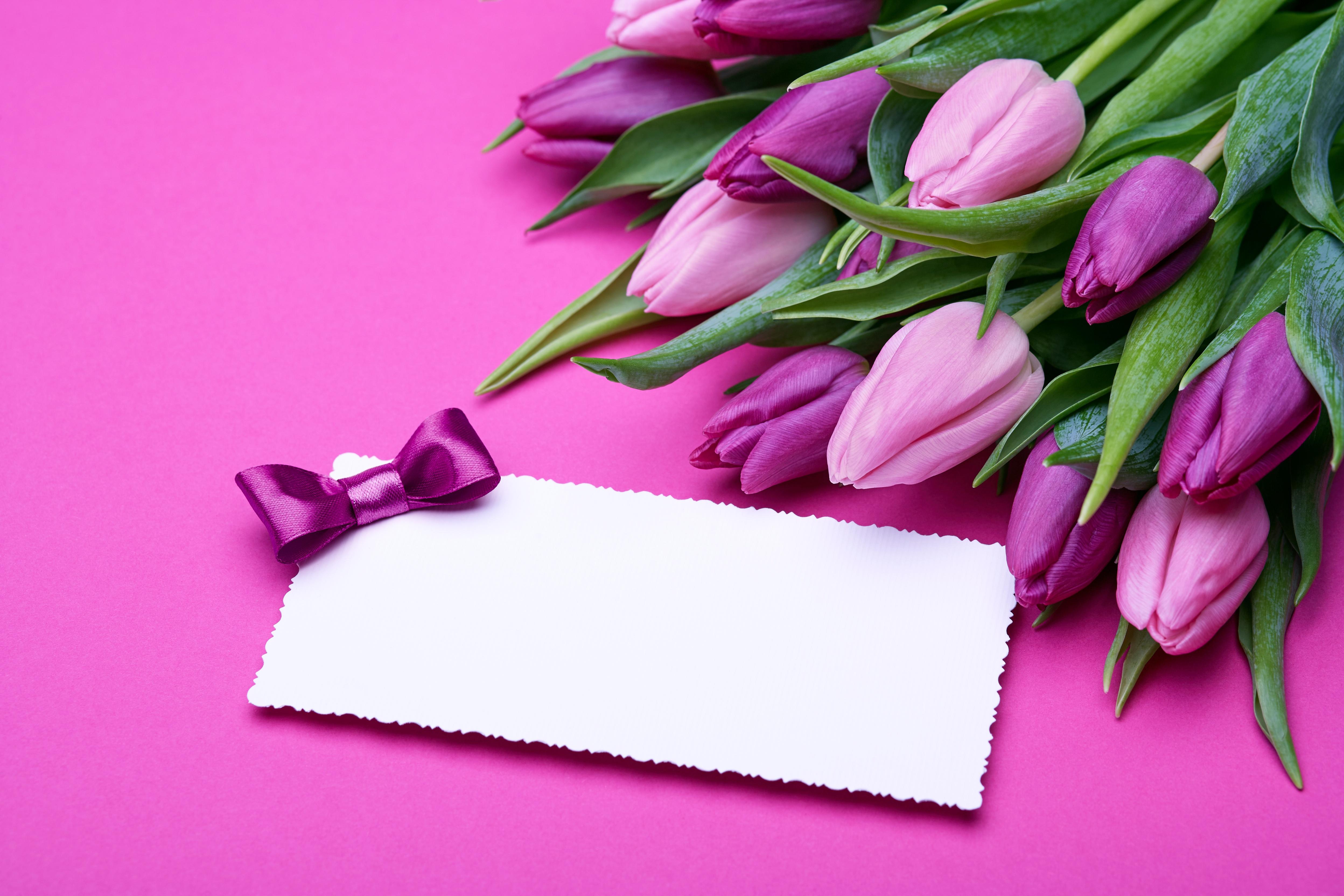 Открытки с тюльпанами без надписей, анимация