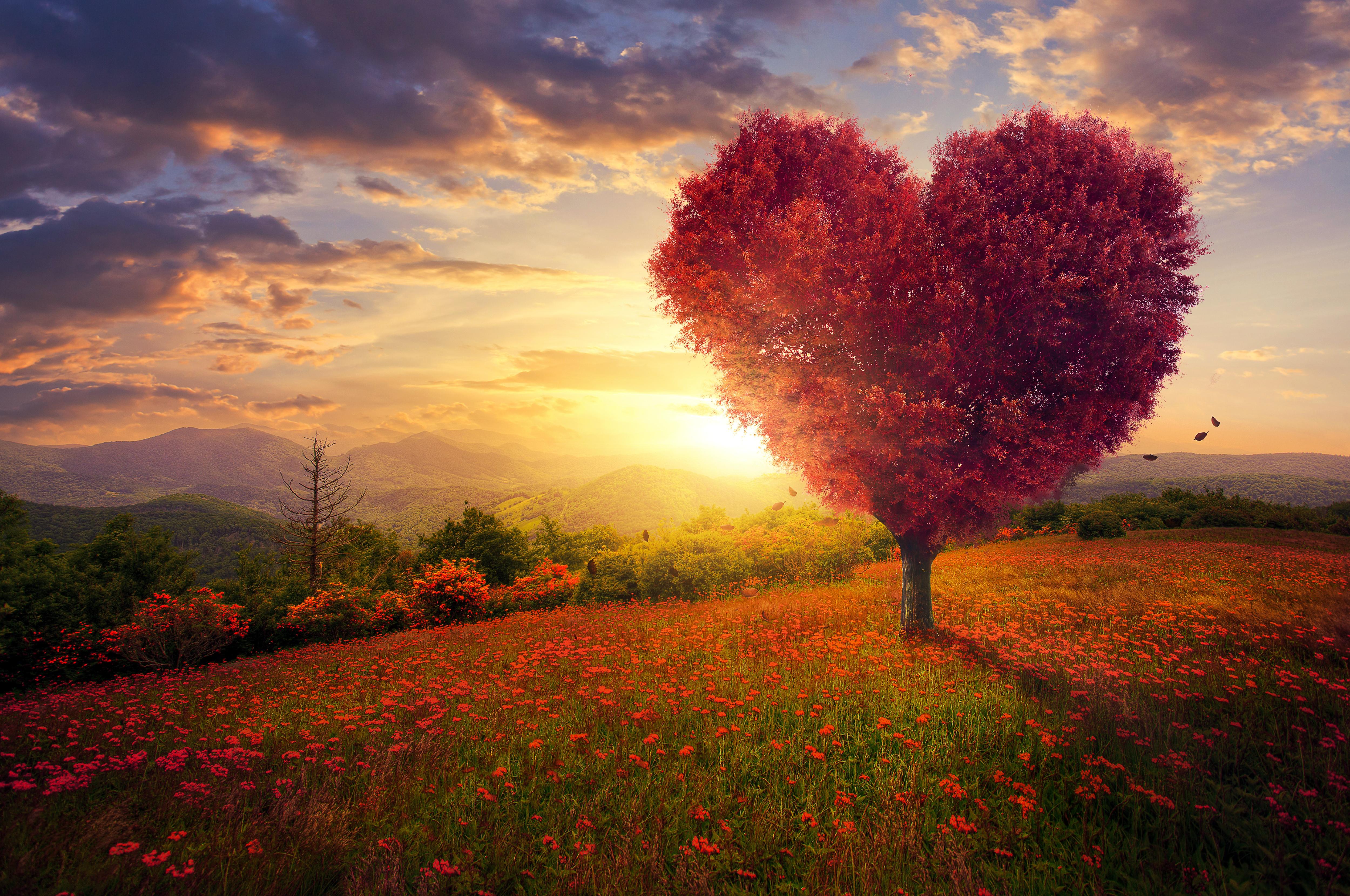 картинки дерево любви горе-рыбаки перестают