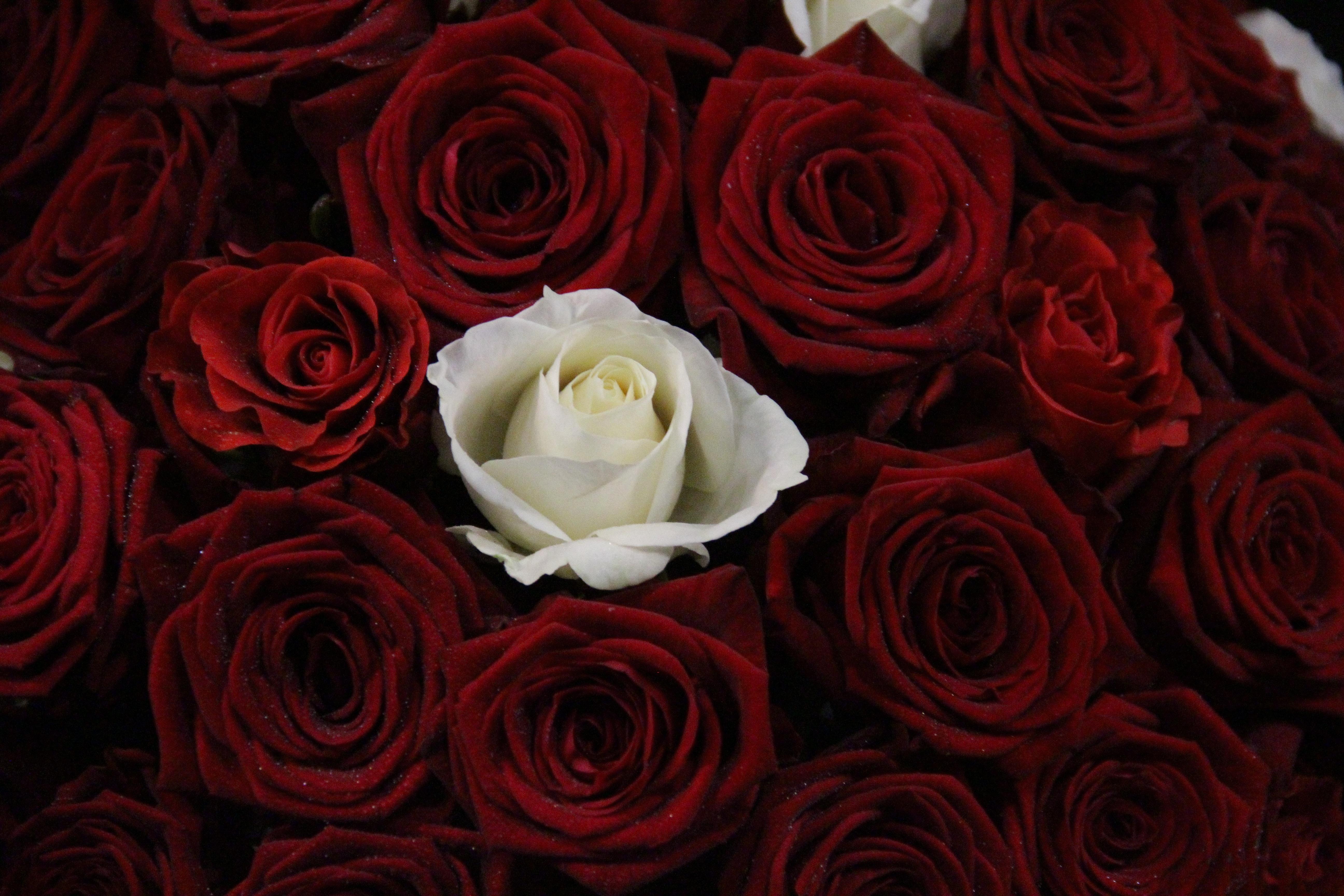 Букет алых и белых роз