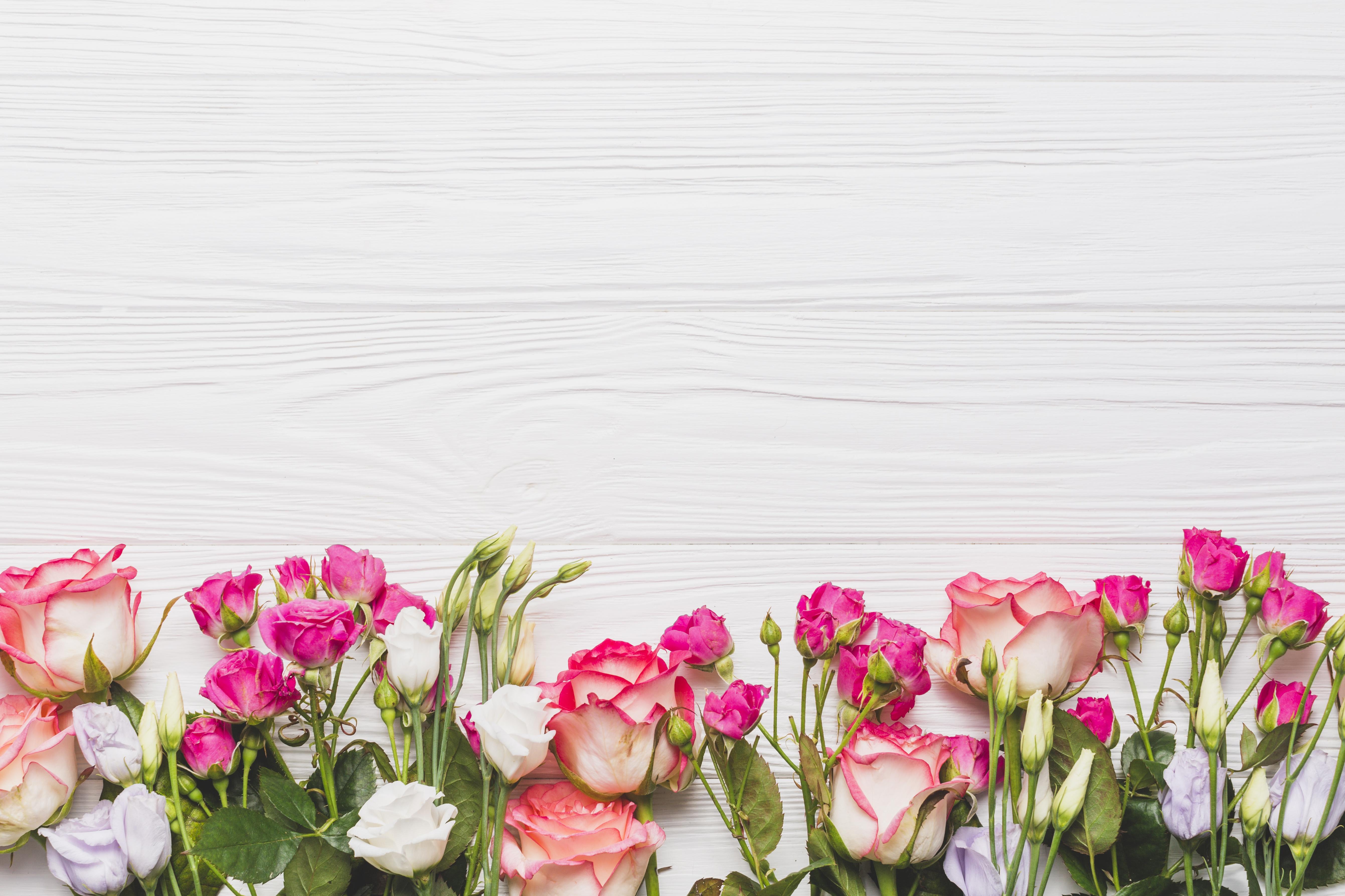 Картинка фон цветы снизу