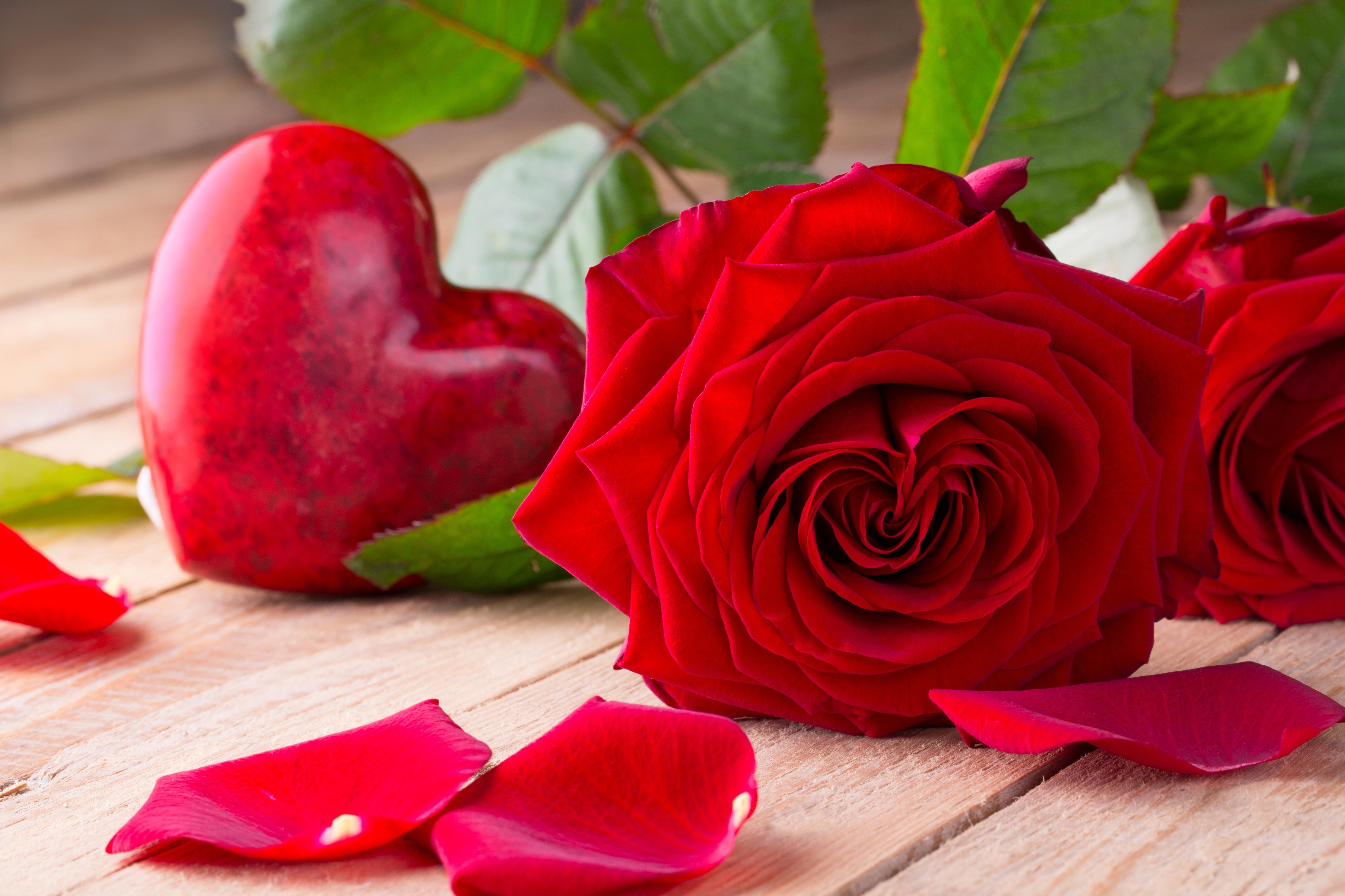Розы открытки про любовь